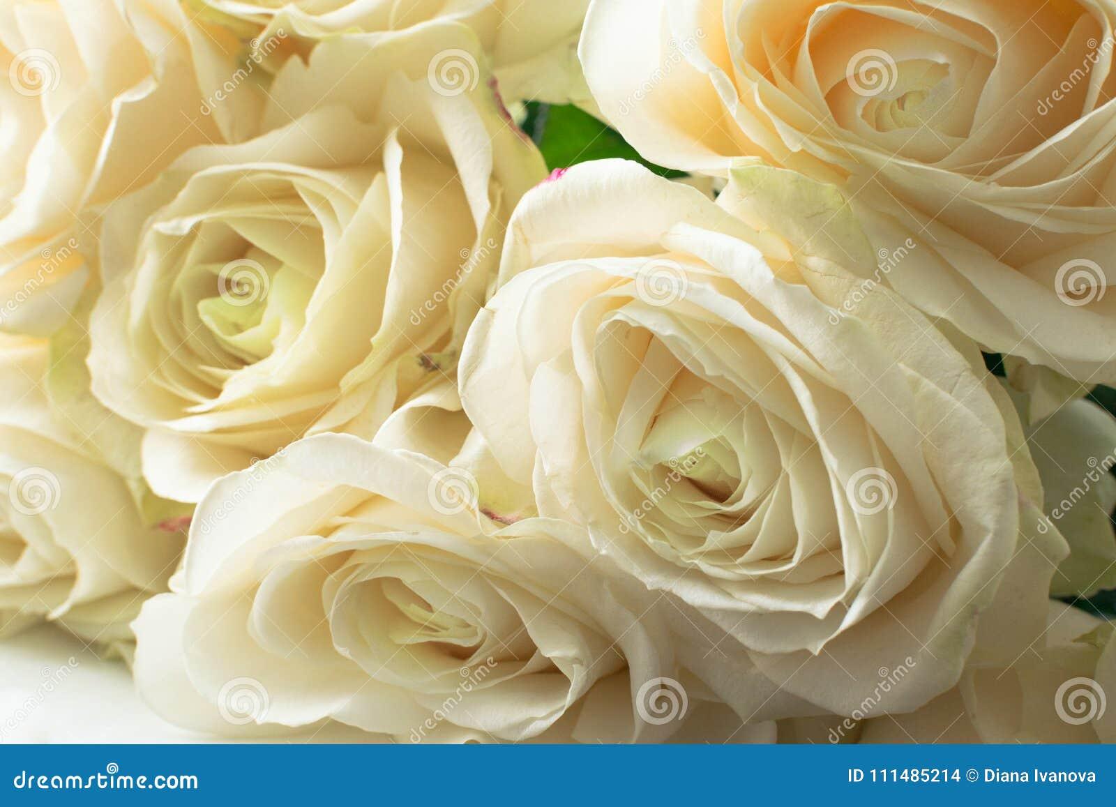 белые чувствительные и красивые нежные розы, мягкий фокус Женщины   праздник s 8-ое марта Торжество подарок