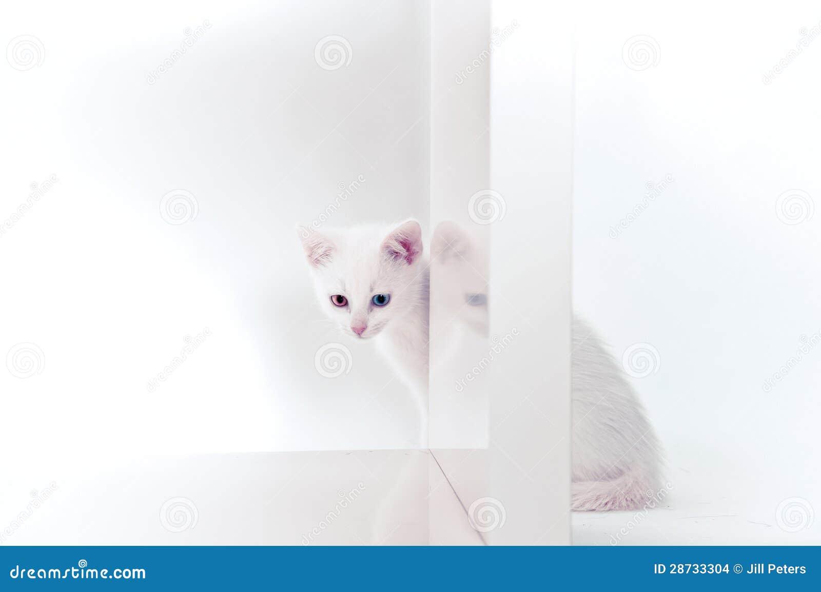 Белый котенок за книжными полками