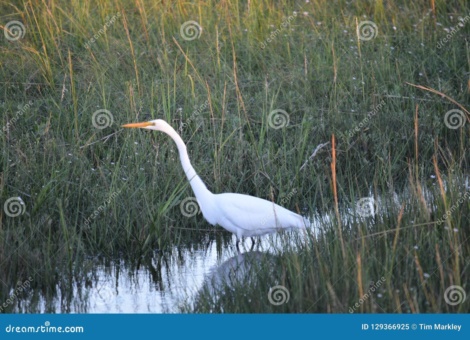 Белый кран в траве
