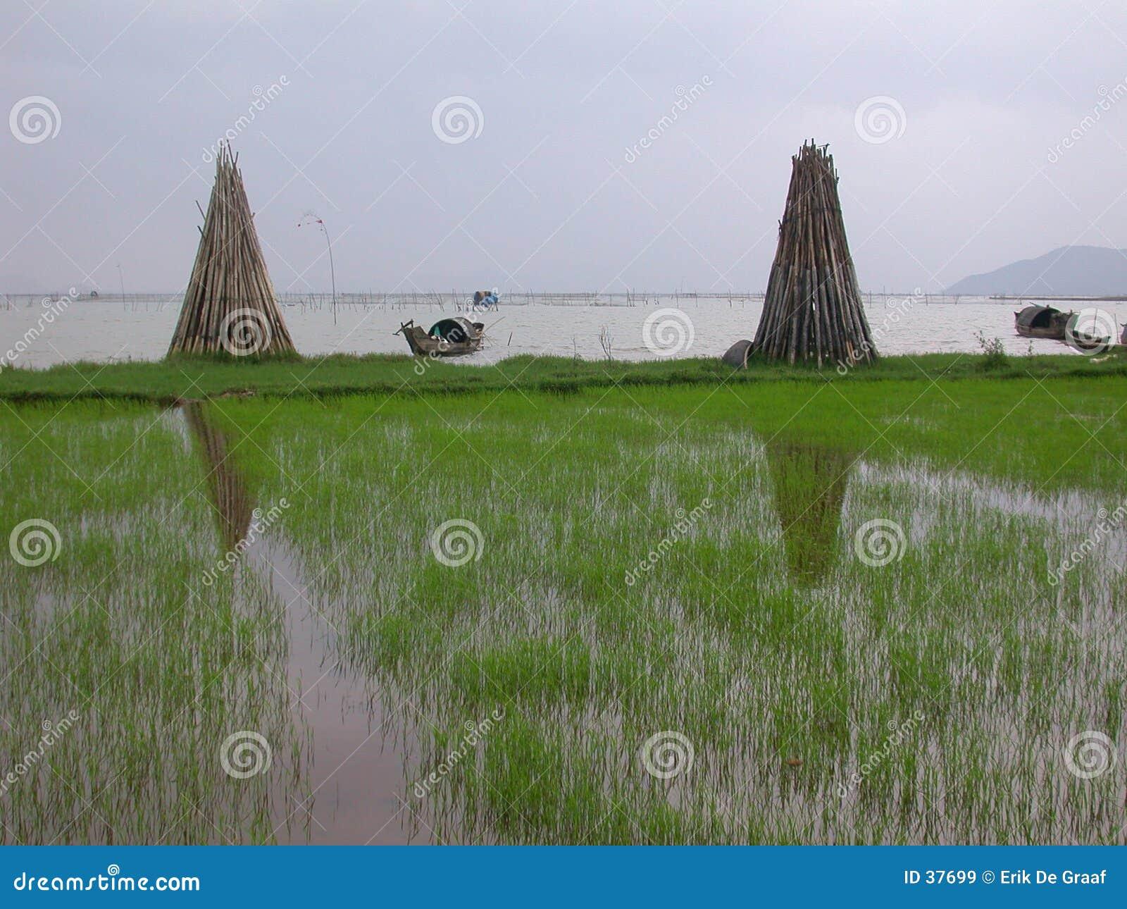 береговая линия Вьетнам