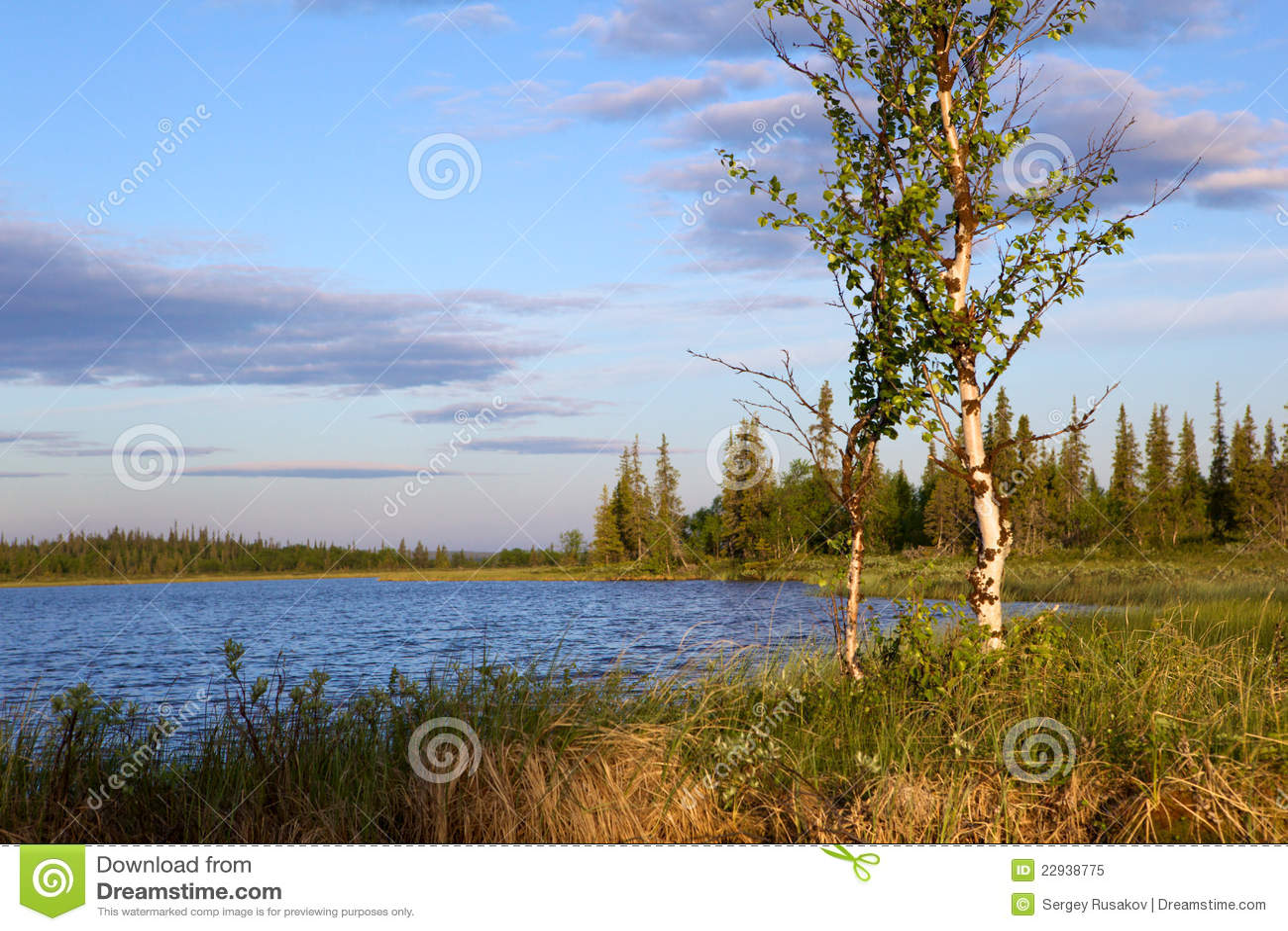 Стоковое фото rf берег реки березы
