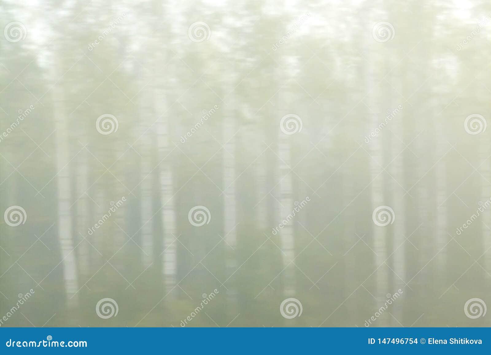 Береза в тумане r