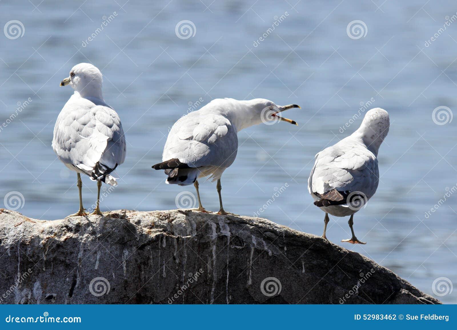 Звук чайка скачать бесплатно