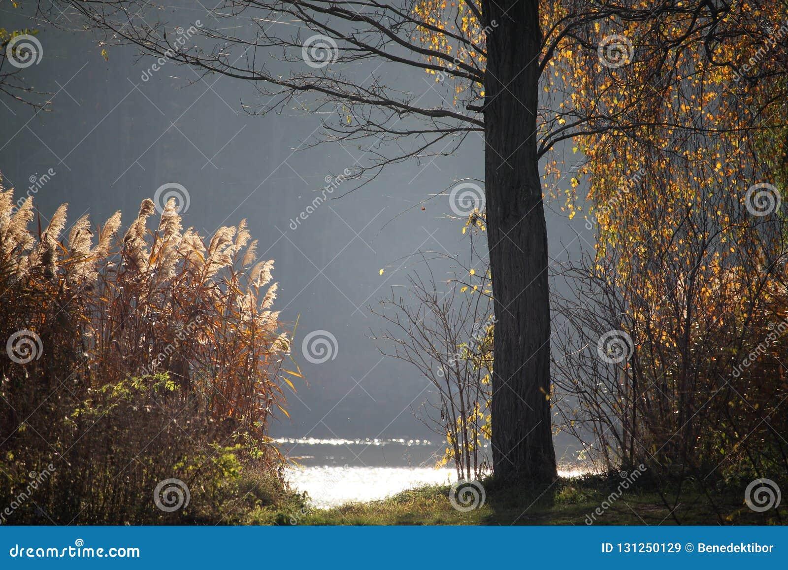 Бечевник озера осен с лесом на заднем плане