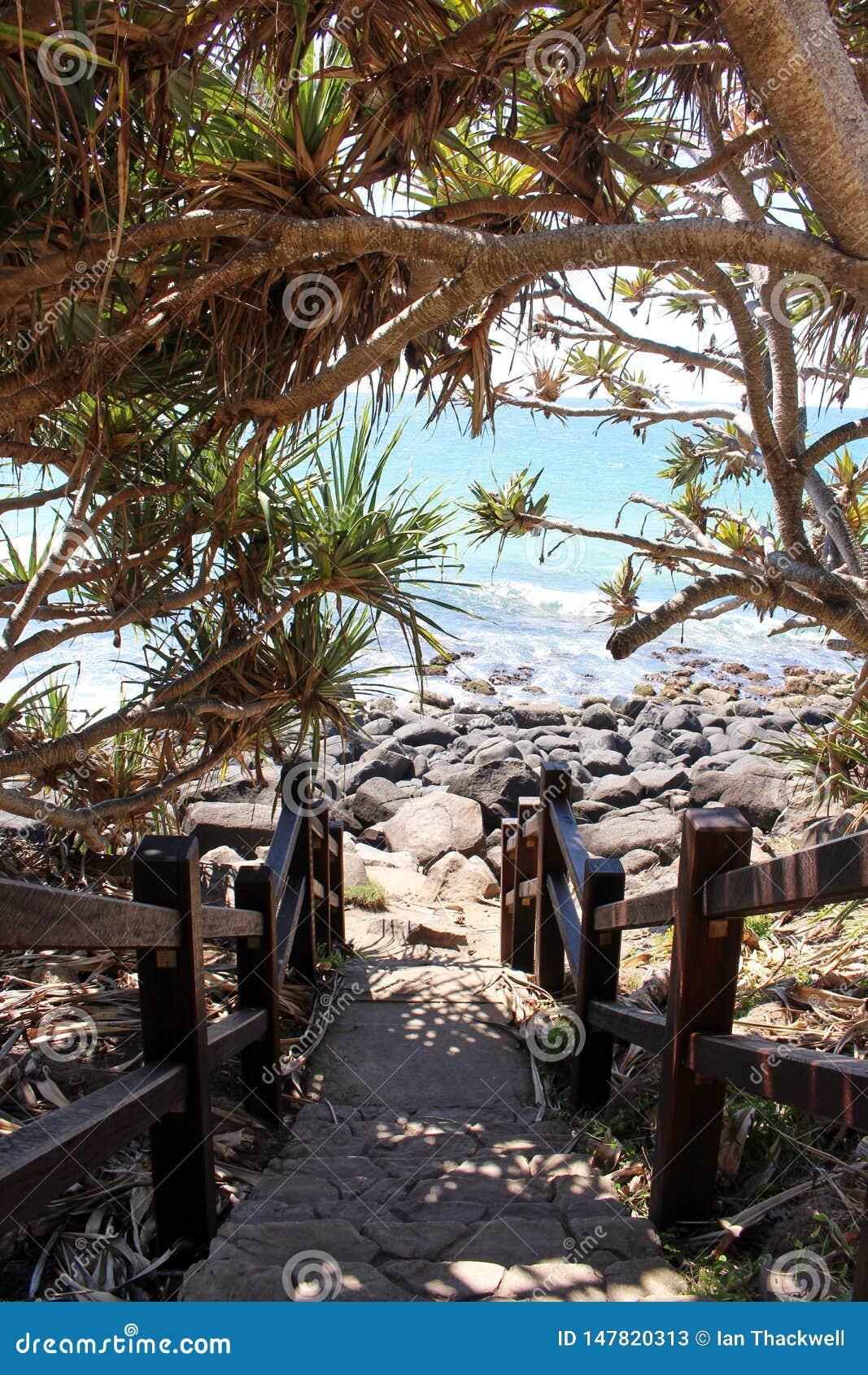 Бечевник тропы пляжа скалистый затеняемый с ладонью пандана