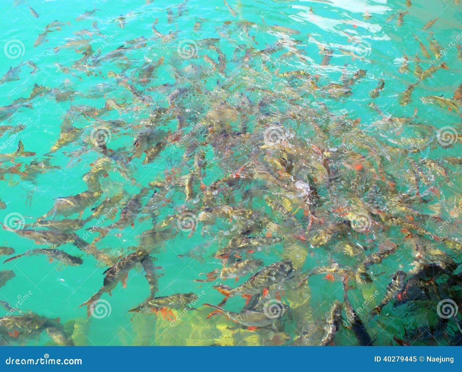 Белая плотва свежих рыб