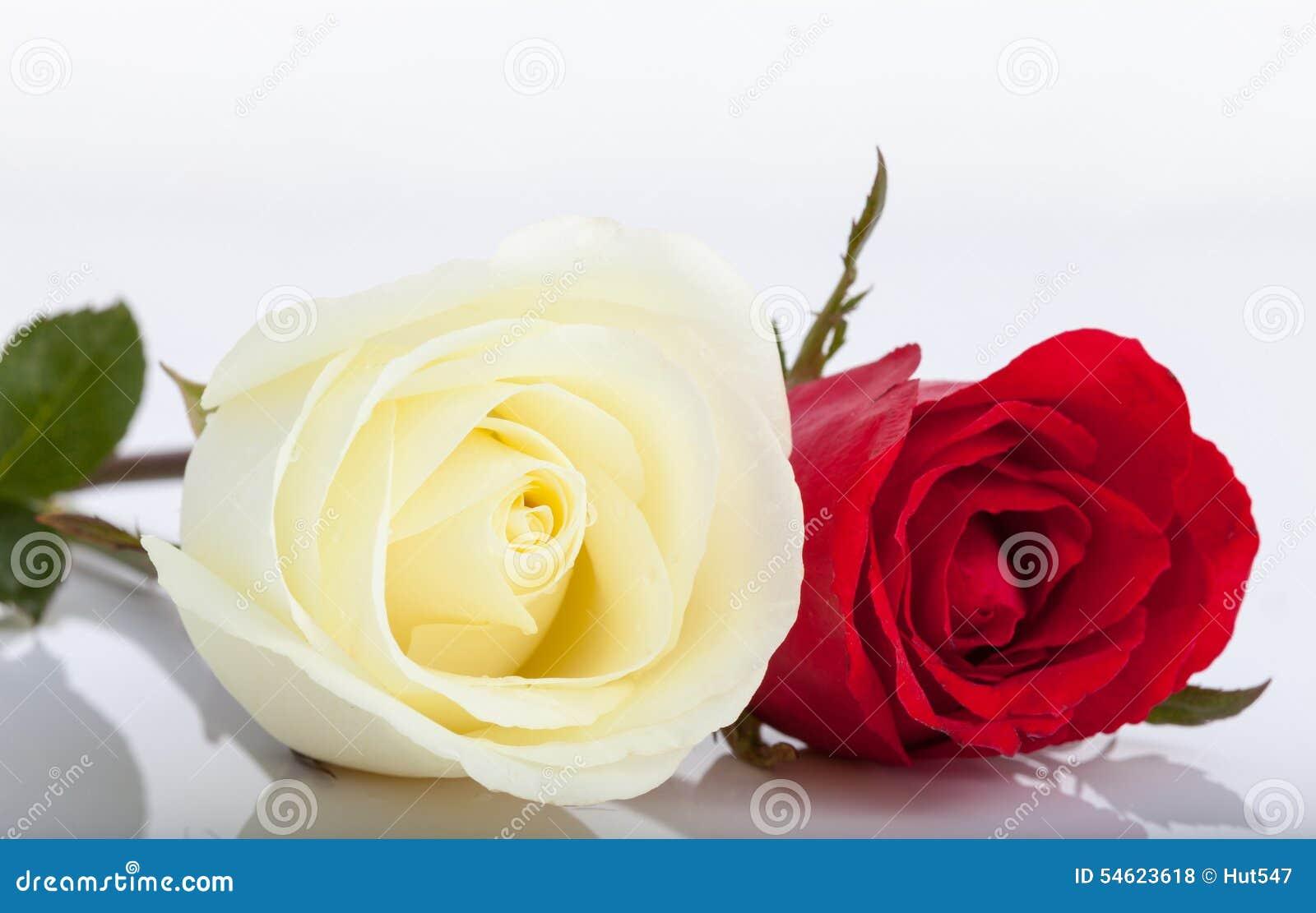 Большая роза из бумаги 72