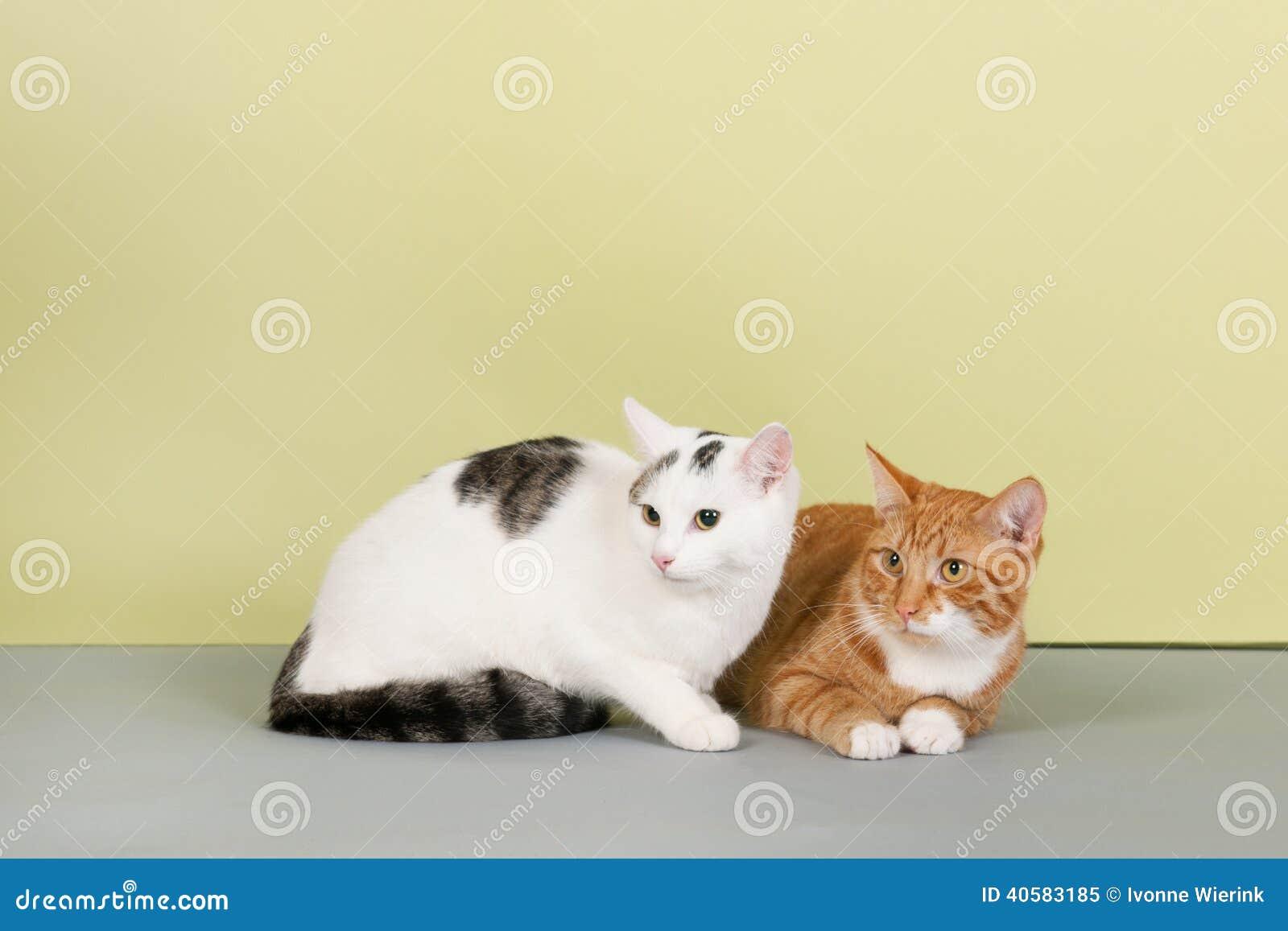 белизна кота красная