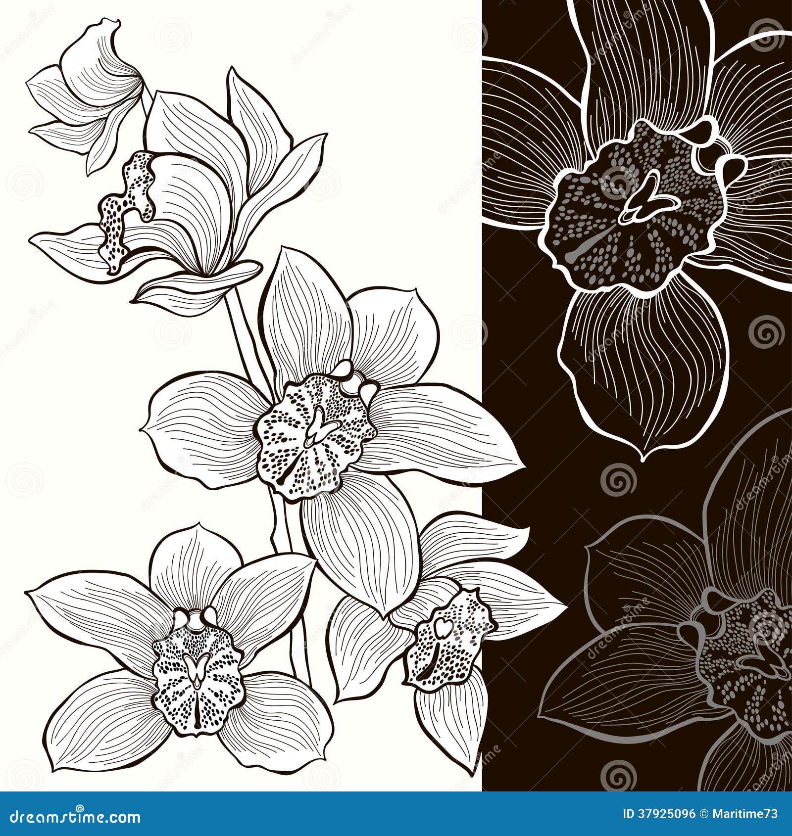 Белые и черные орхидеи