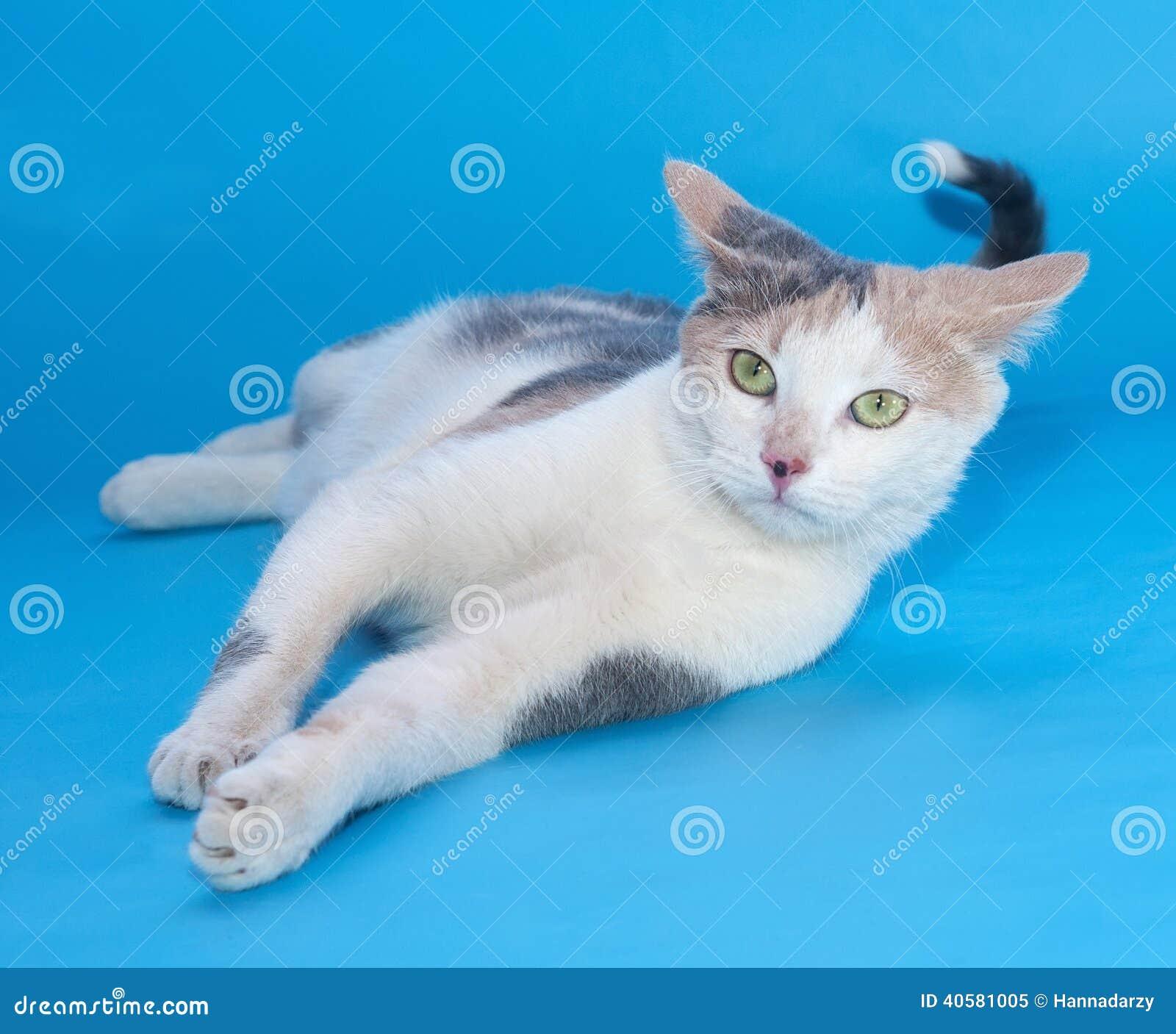 Белые лож кота делая стороны