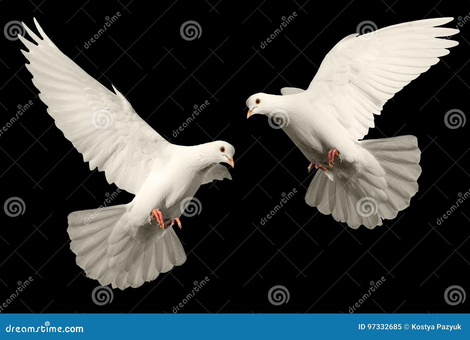 Белый голубь летает