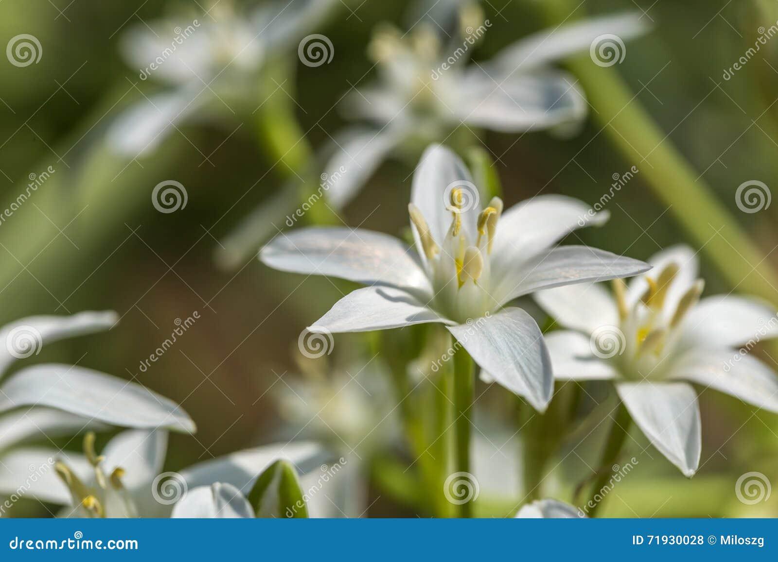 Белый зацветать цветков сада