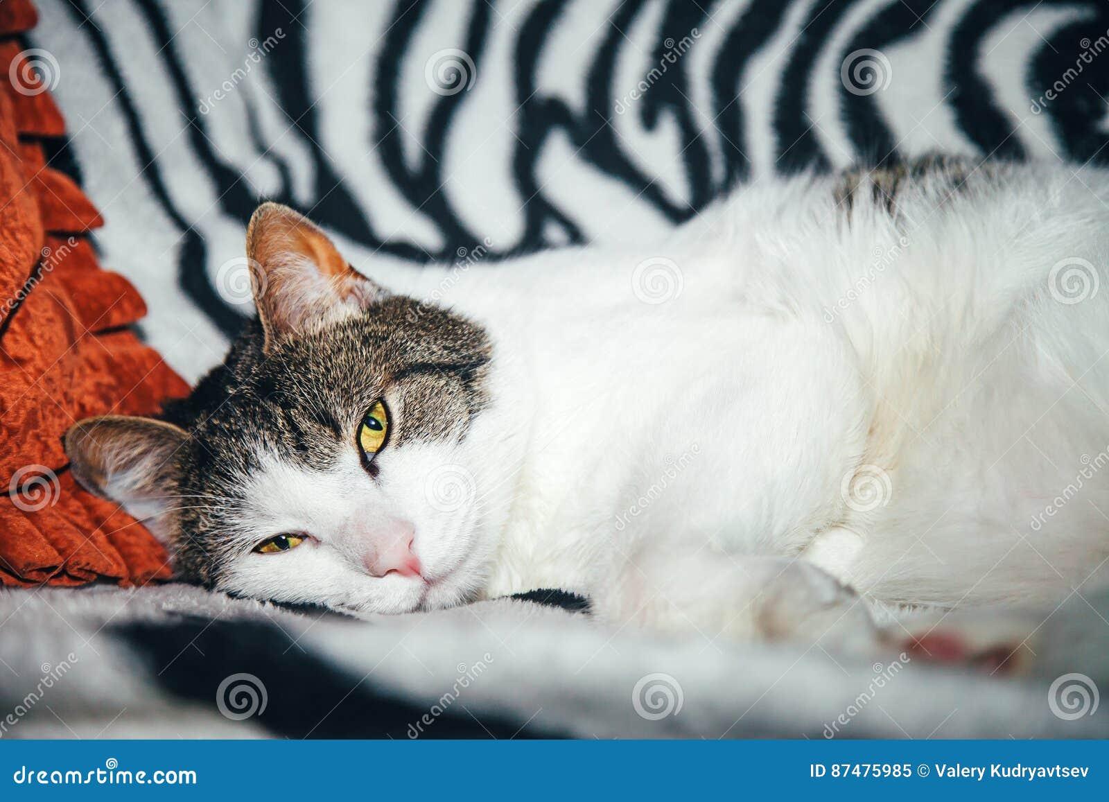 Белый кот на Striped предпосылке