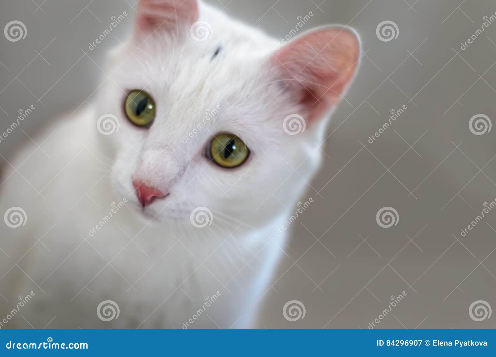 Коты крупный план