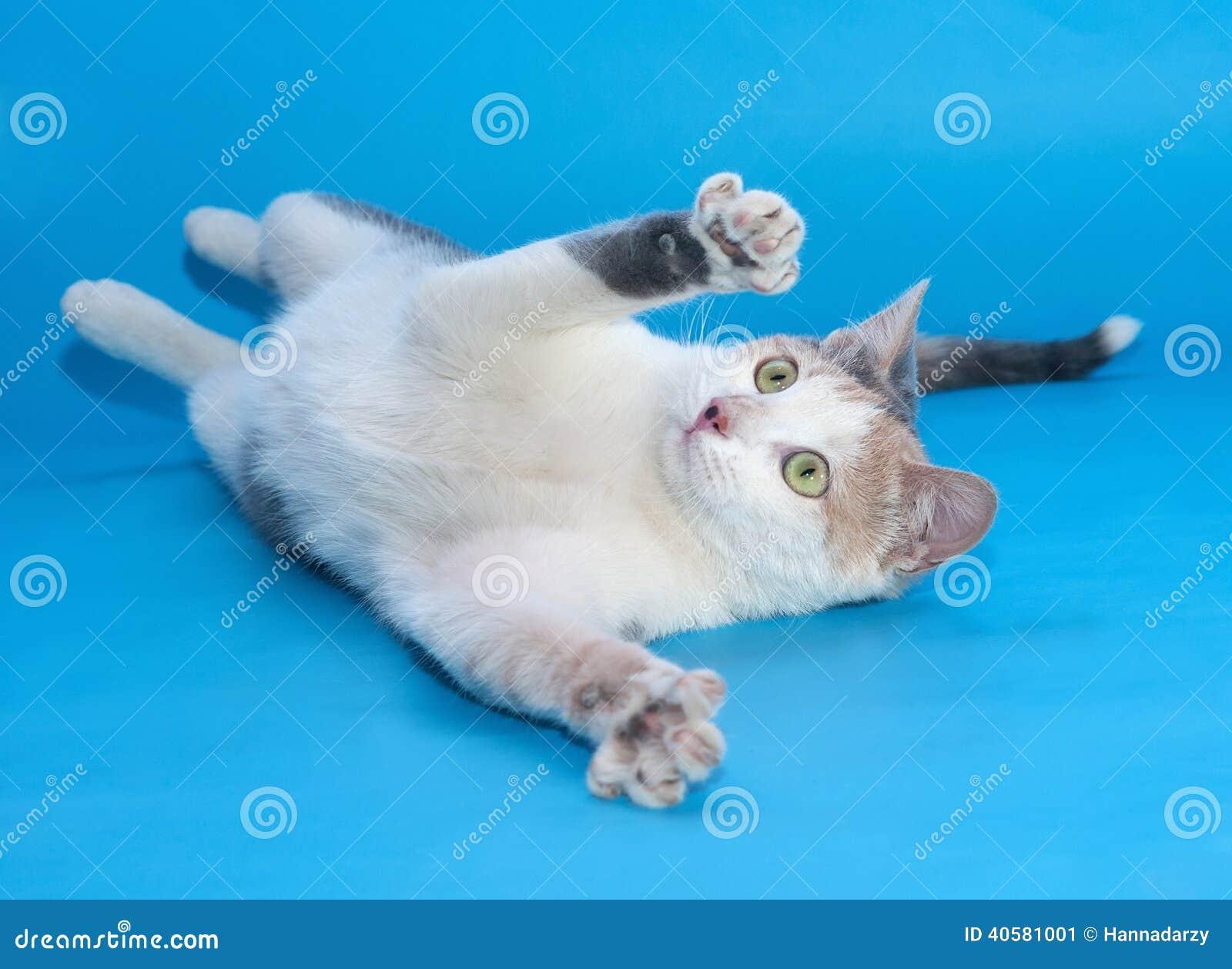 Белый кот с играми заплат упал на синь