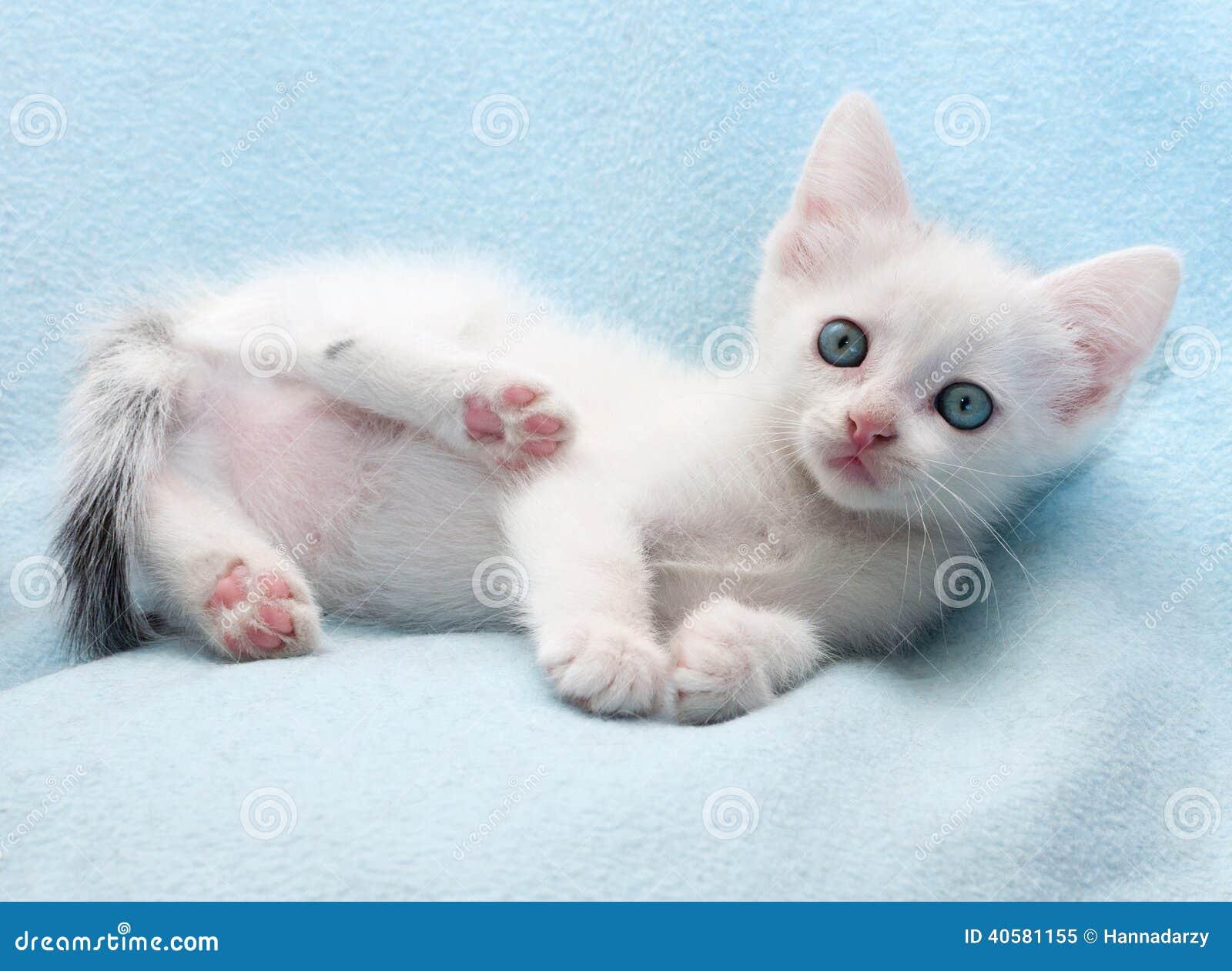 Белый пушистый котенок лежит на сини