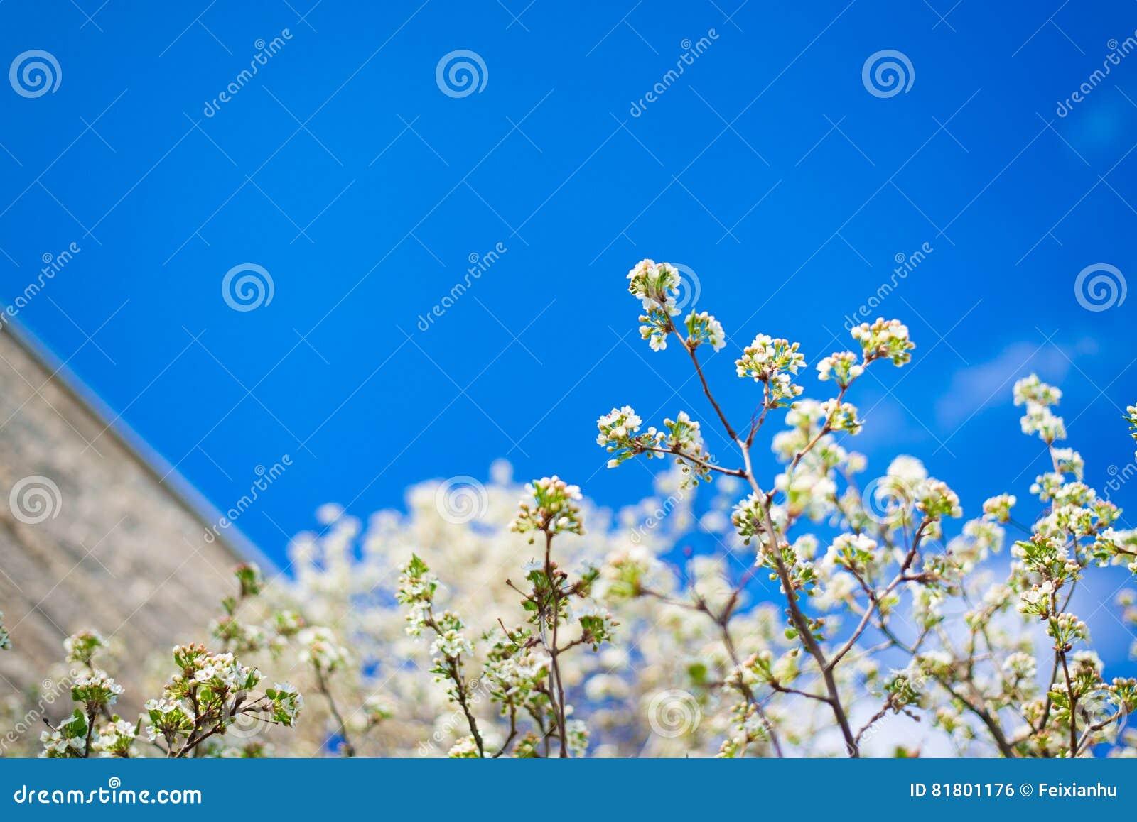 Белый цветок с голубым небом и строить на заднем плане