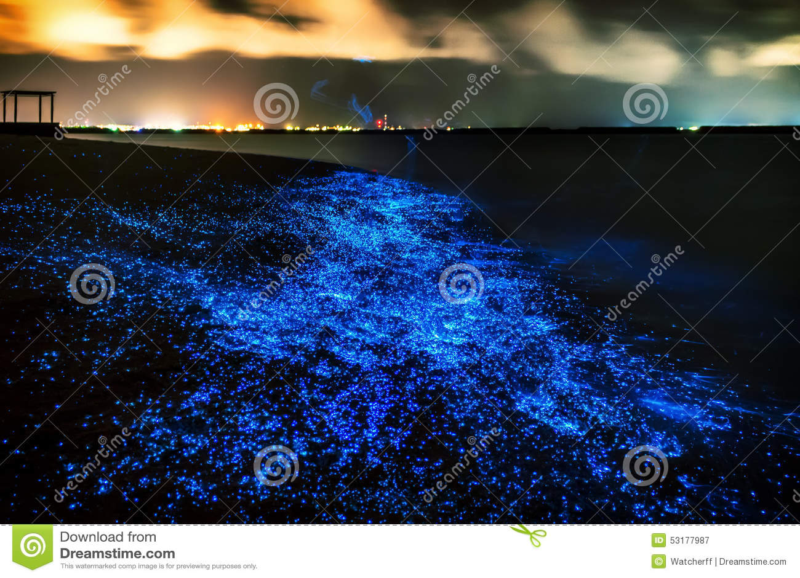 Био люминесценция Освещение планктона на Мальдивах Много bri