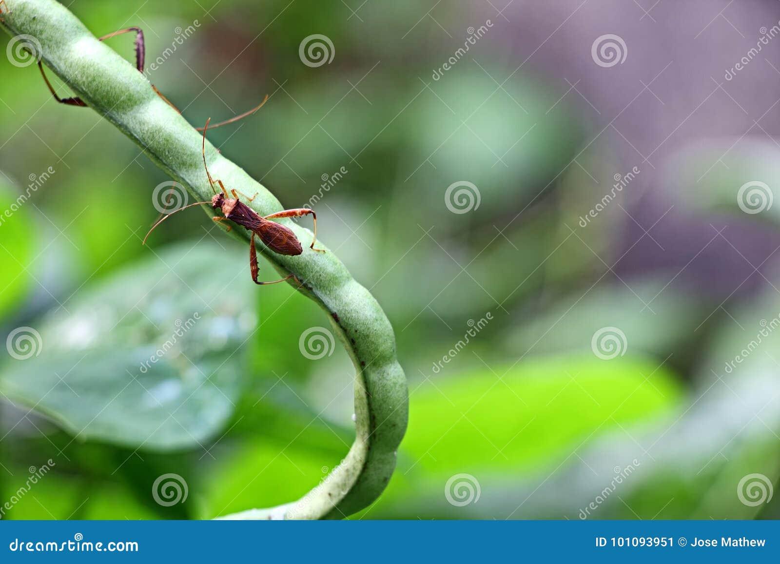Тип цветка фиалка