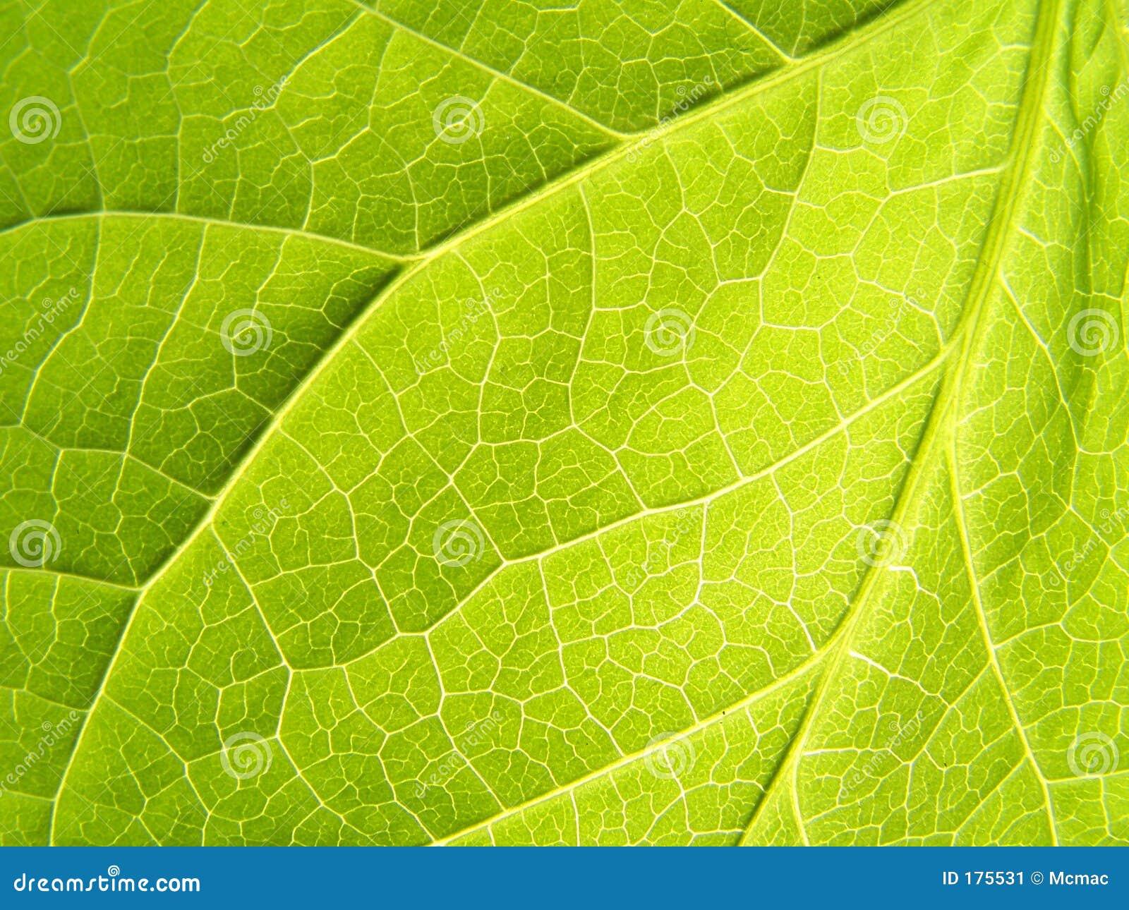близкие листья вверх