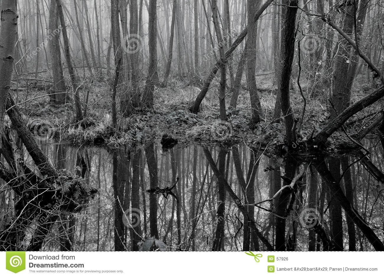 болотоы
