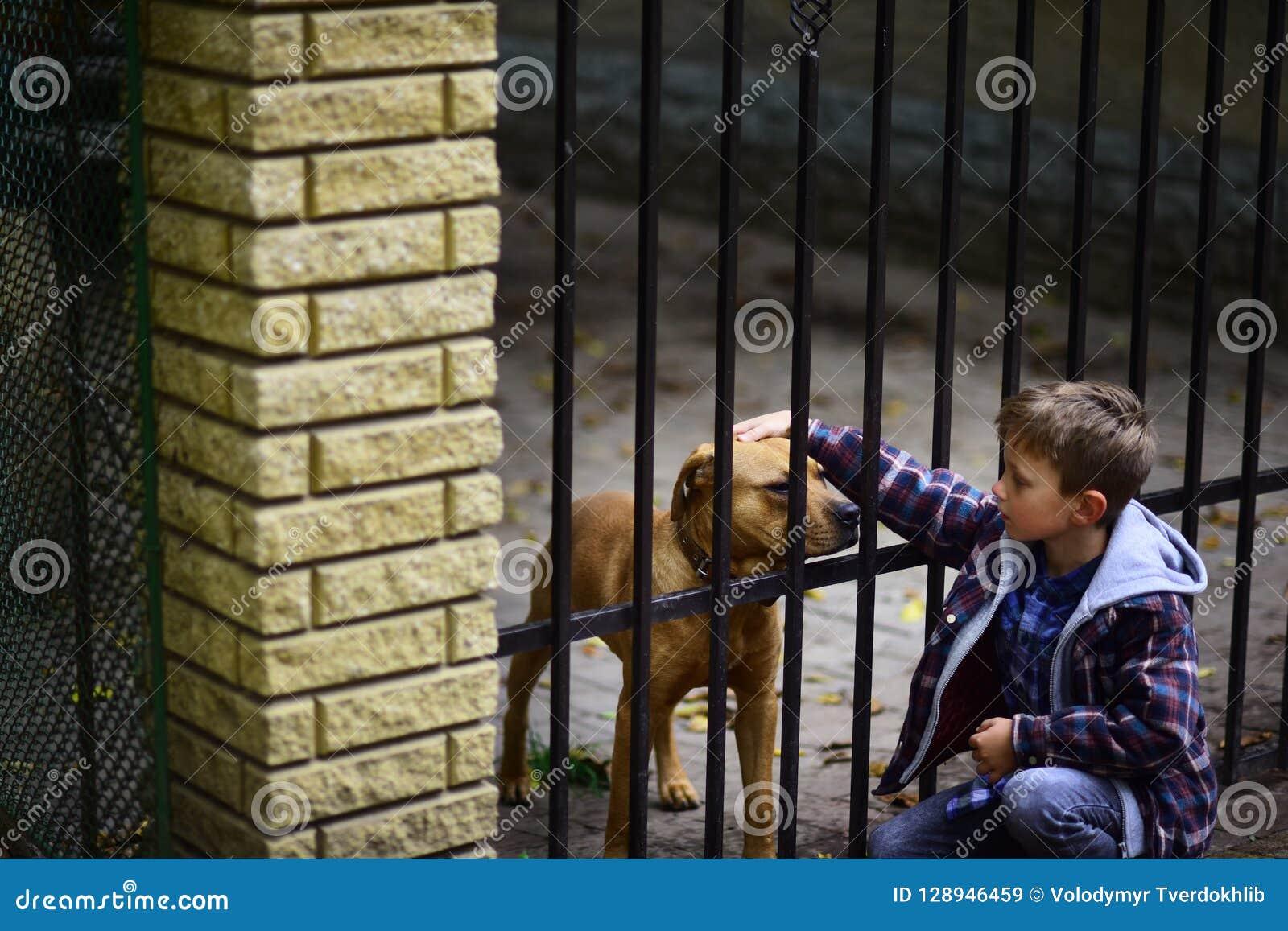 Большая заживление терапия приятельство и влюбленность Мальчик patting собака Мальчик принимает нового друга от собак