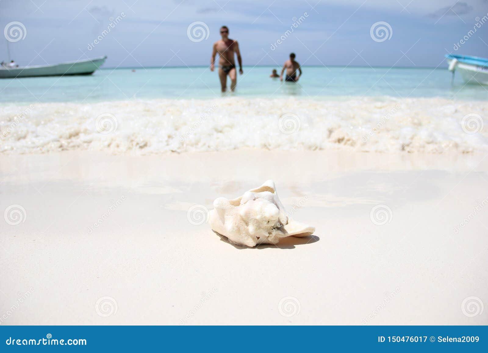 Большая раковина океана розовых mother-of-pearl gigas Strombus лежит на белом песке на карибском море на острове