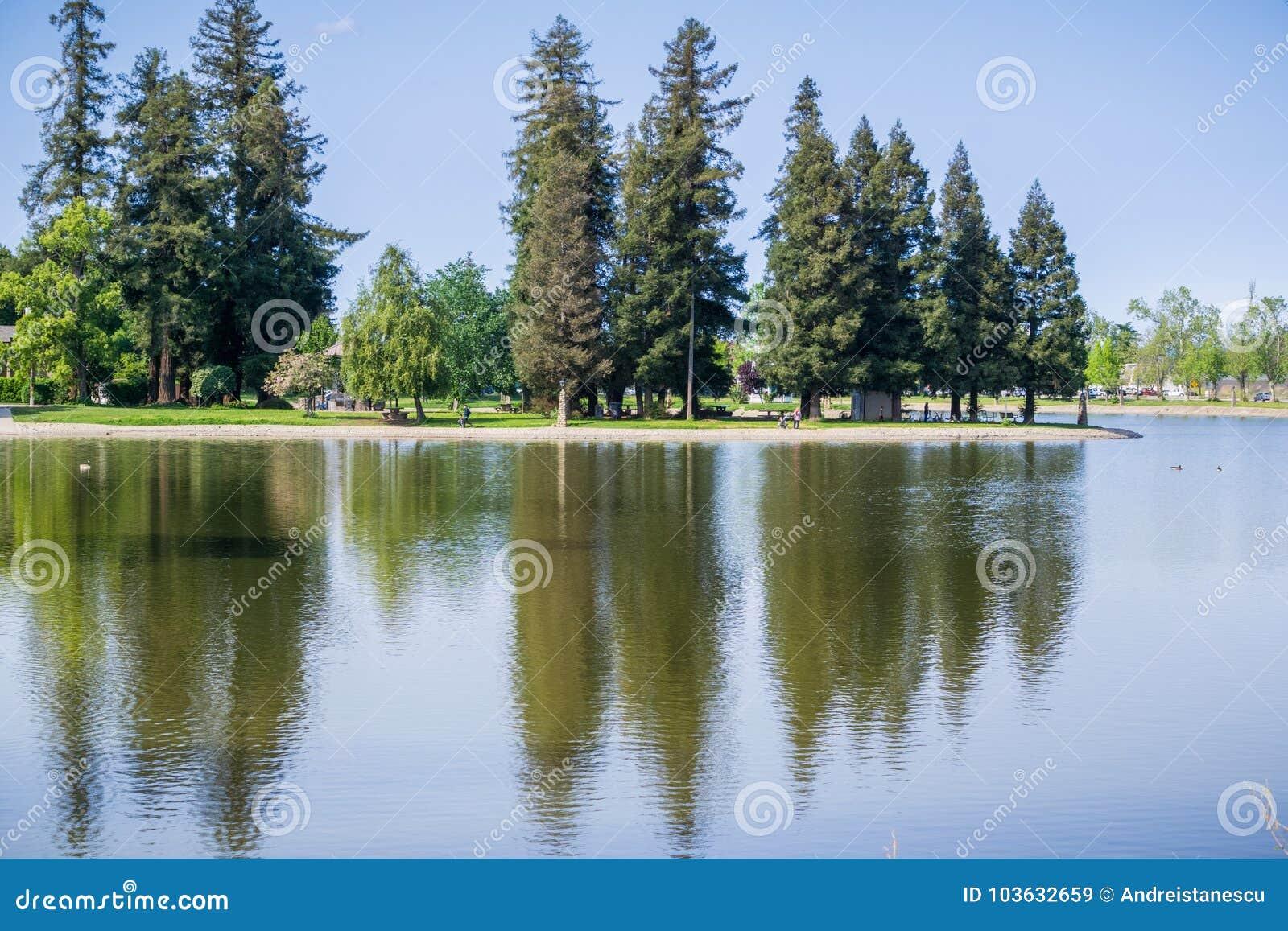 Большие деревья redwood отразили в спокойной воде озера Ellis, Marysille, Калифорнии
