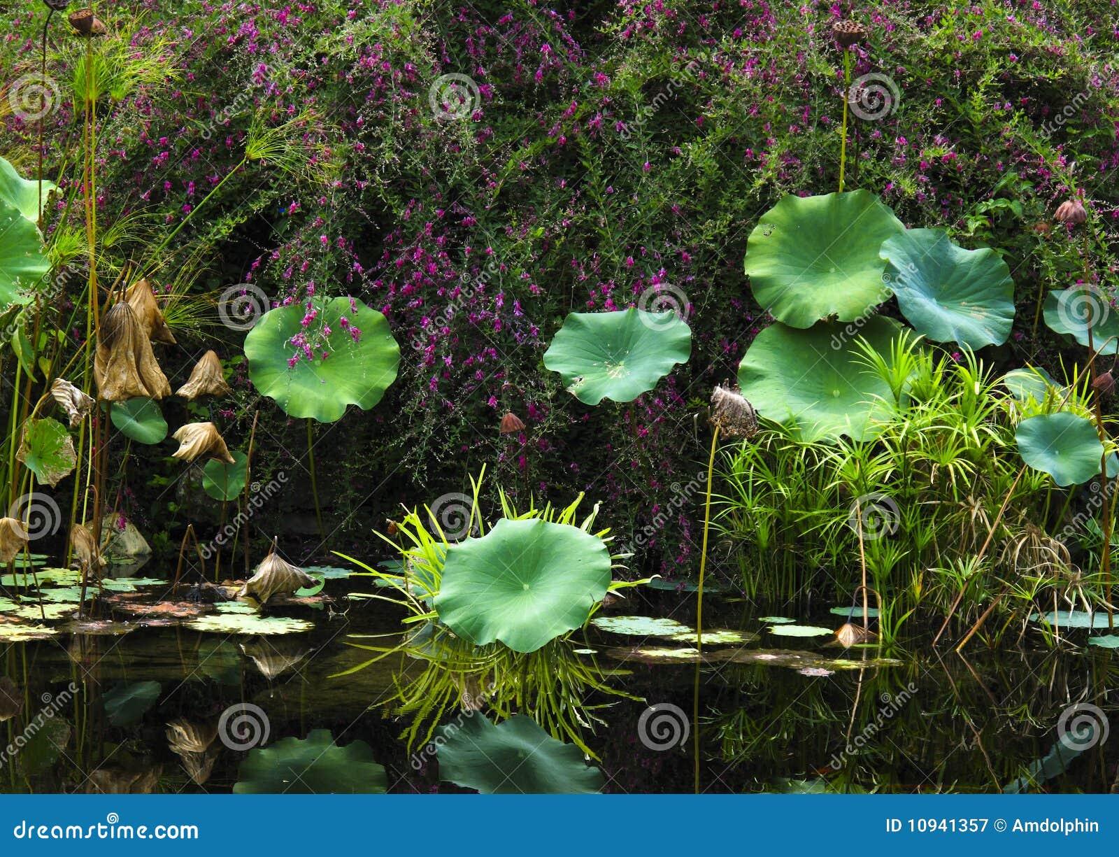 большие листья засаживают одиночную