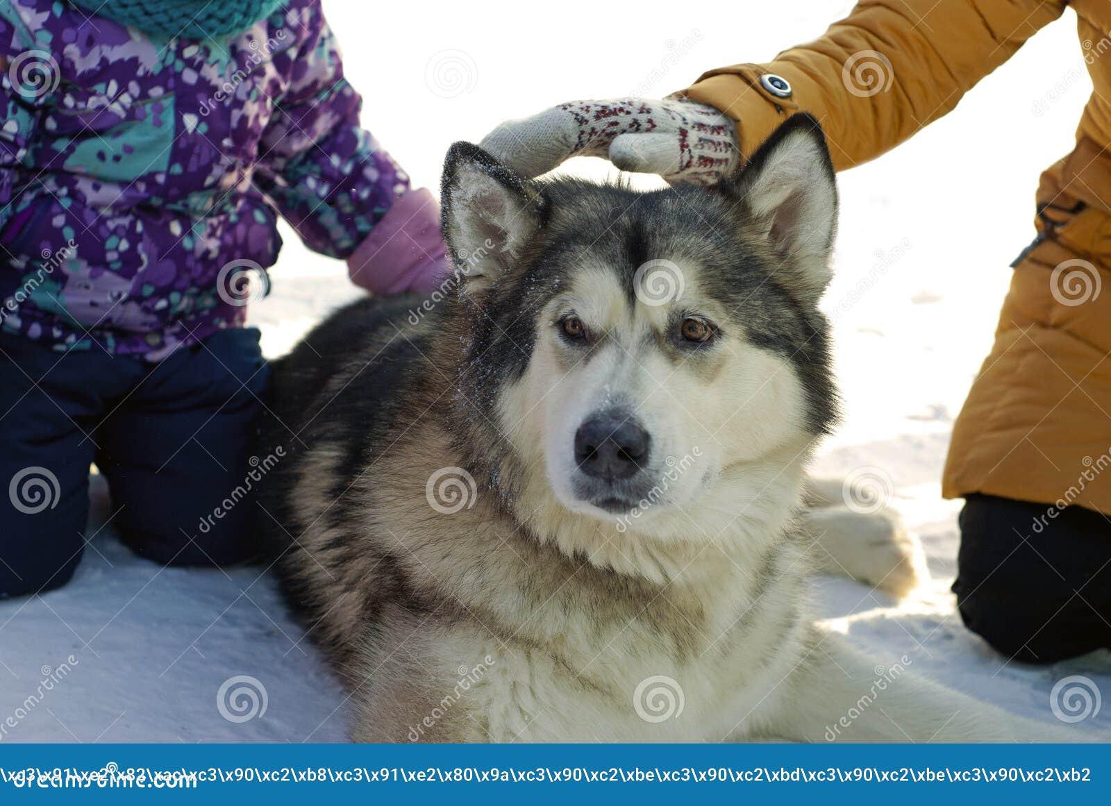 Большие собака и дети