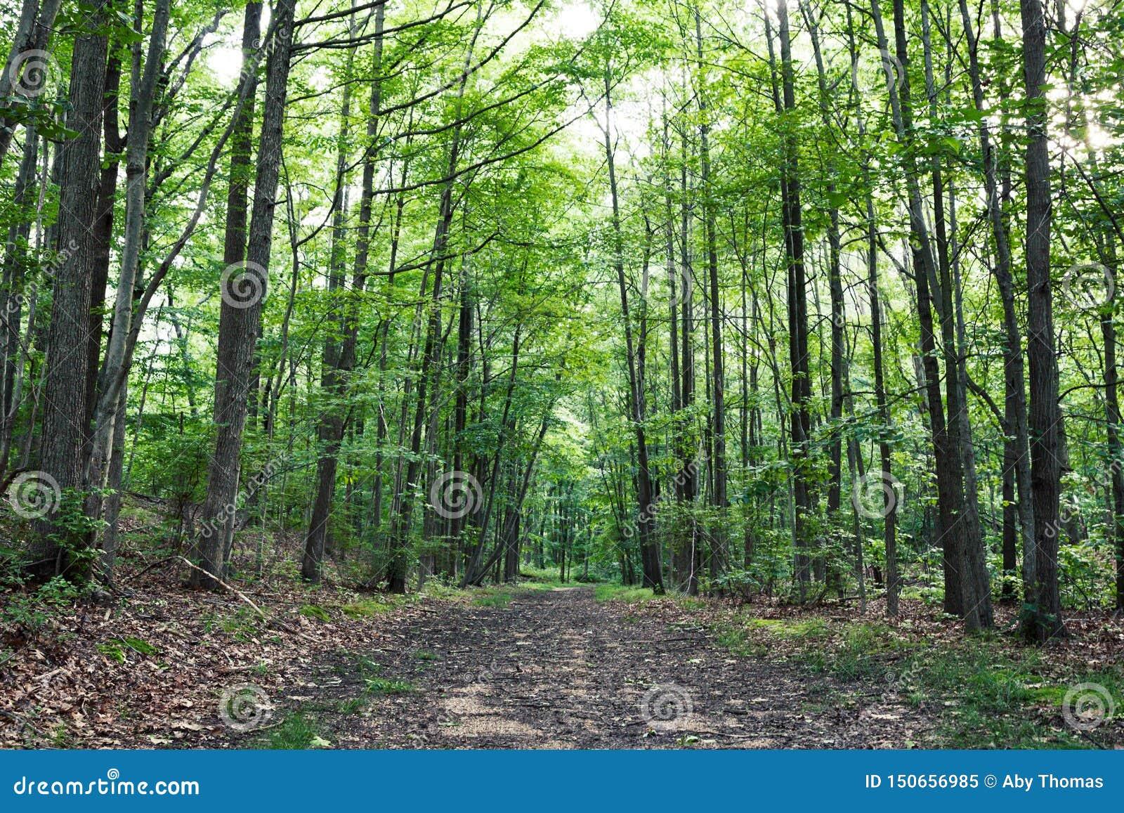 Большинств красивые пешие тропы в Нью-Джерси