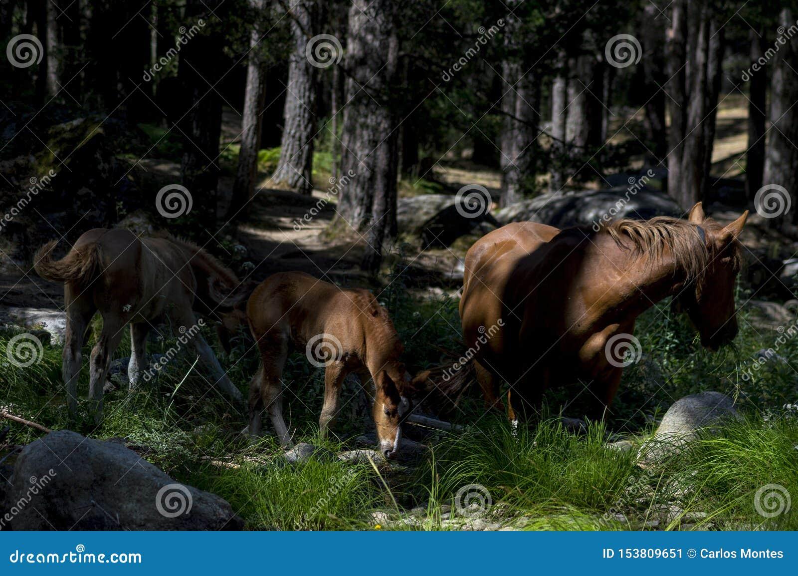 3 больших лошади в лесе