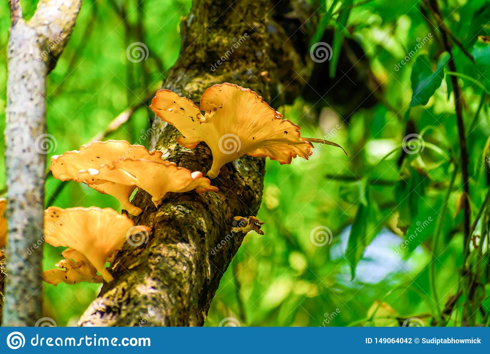 Большой вереск гриба vulgaris или общий Heather, ling или съестной гриб растя в коре дерева и мхе Солнце после полудня светя