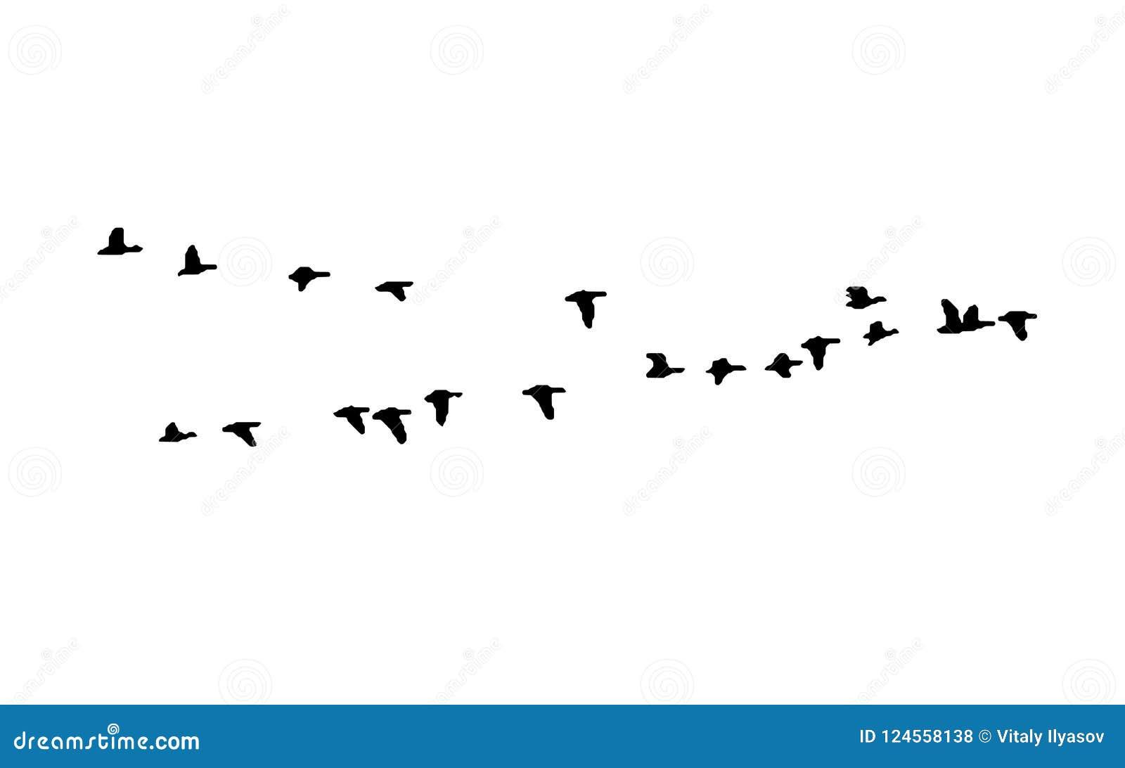 Большой, который бело-противостоят клин гусыни в полете Силуэт вектора стадо птиц