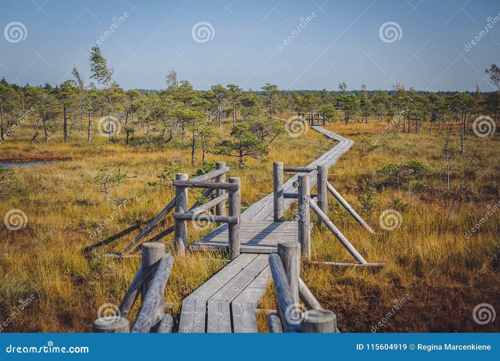 Большой променад трясины Kemeri, национальный парк Kemeri, Латвия