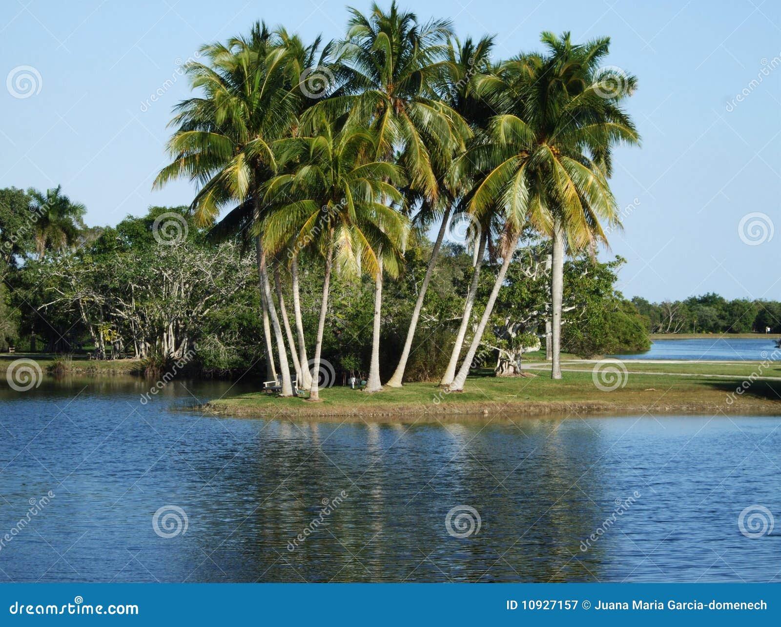ботанические сады тропические