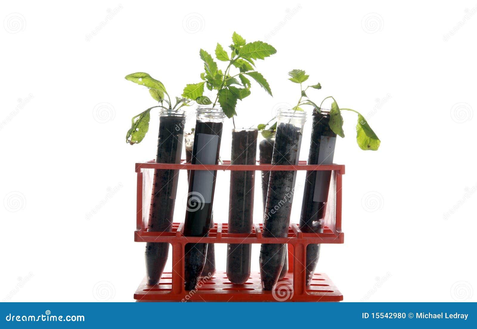 ботаническое исследование