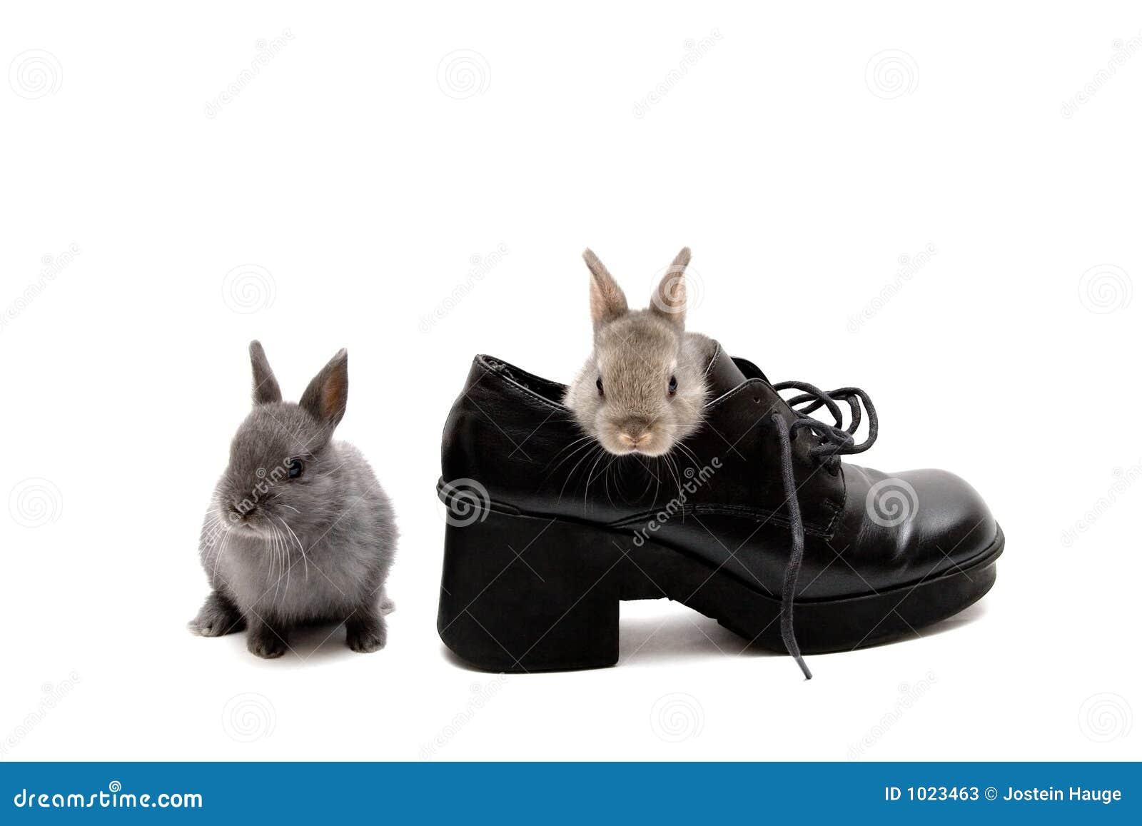 ботинок 2