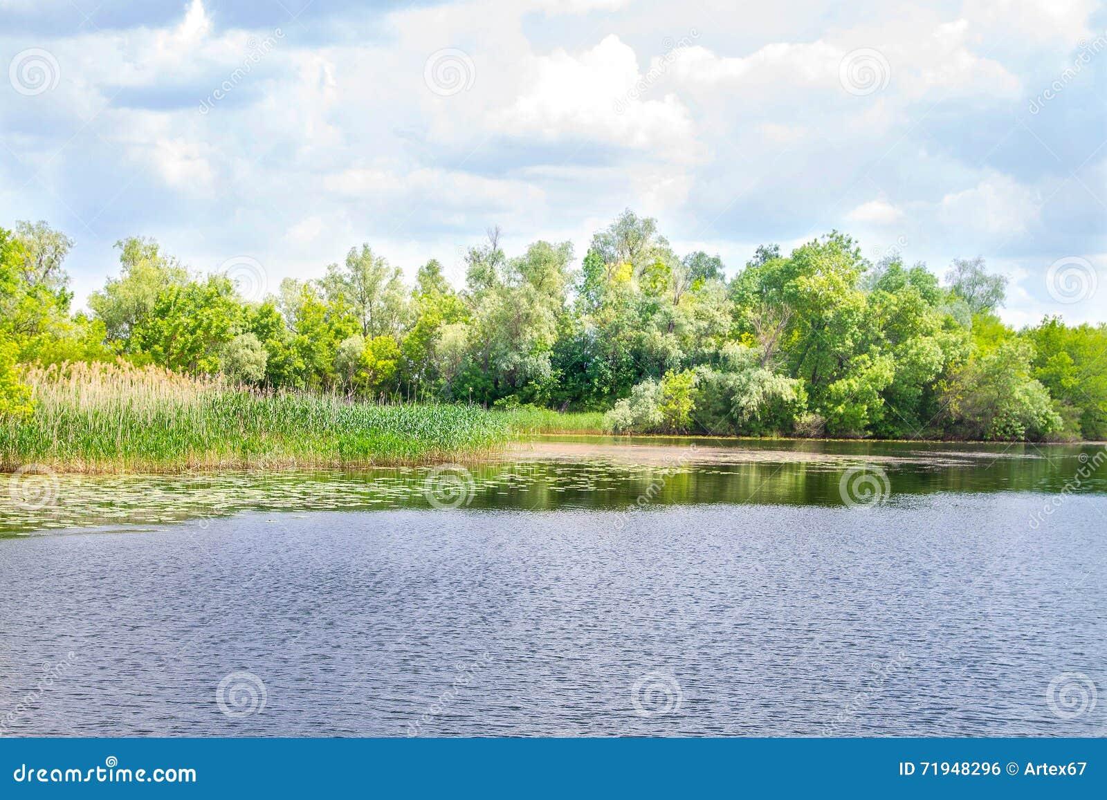 Болота и Kherson Dnieper реки ландшафта