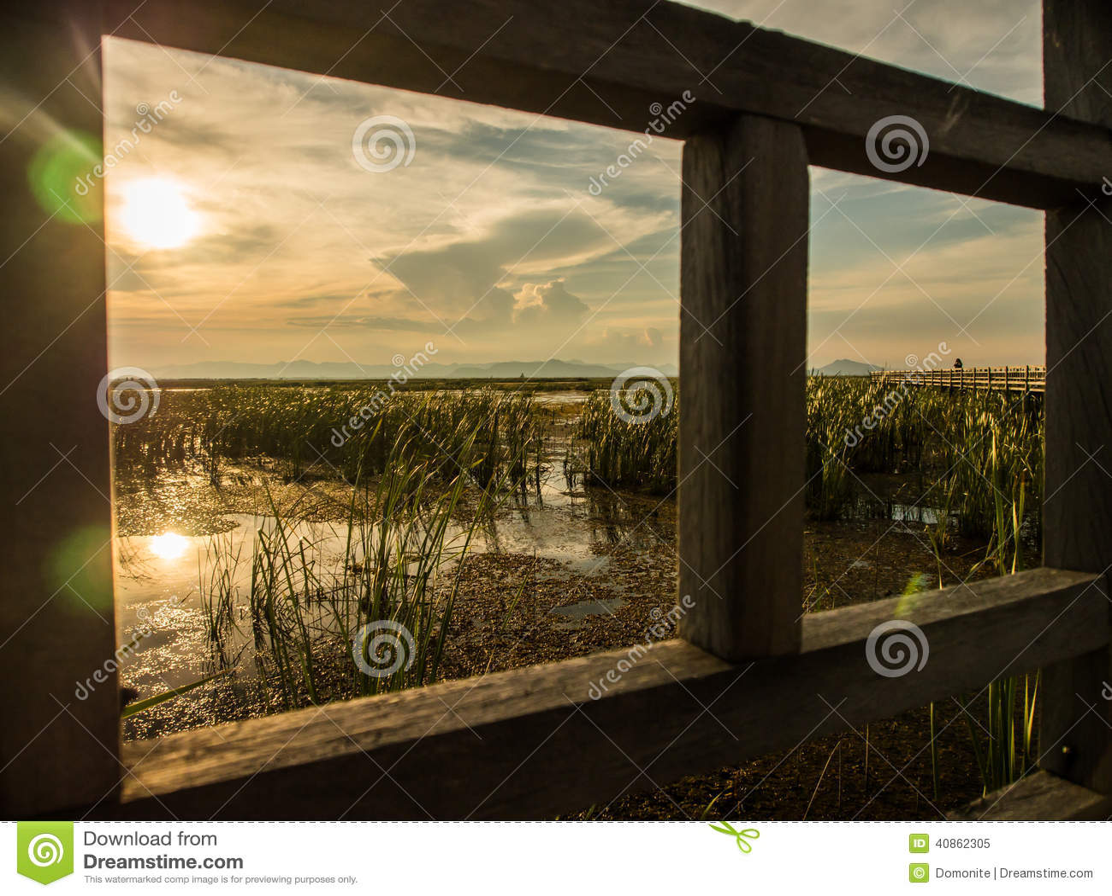 Болото и тростники в рамке моста