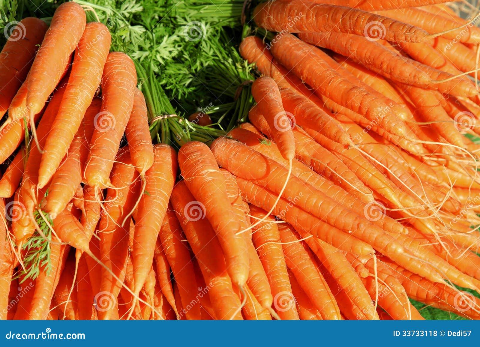 Большая группа в составе моркови