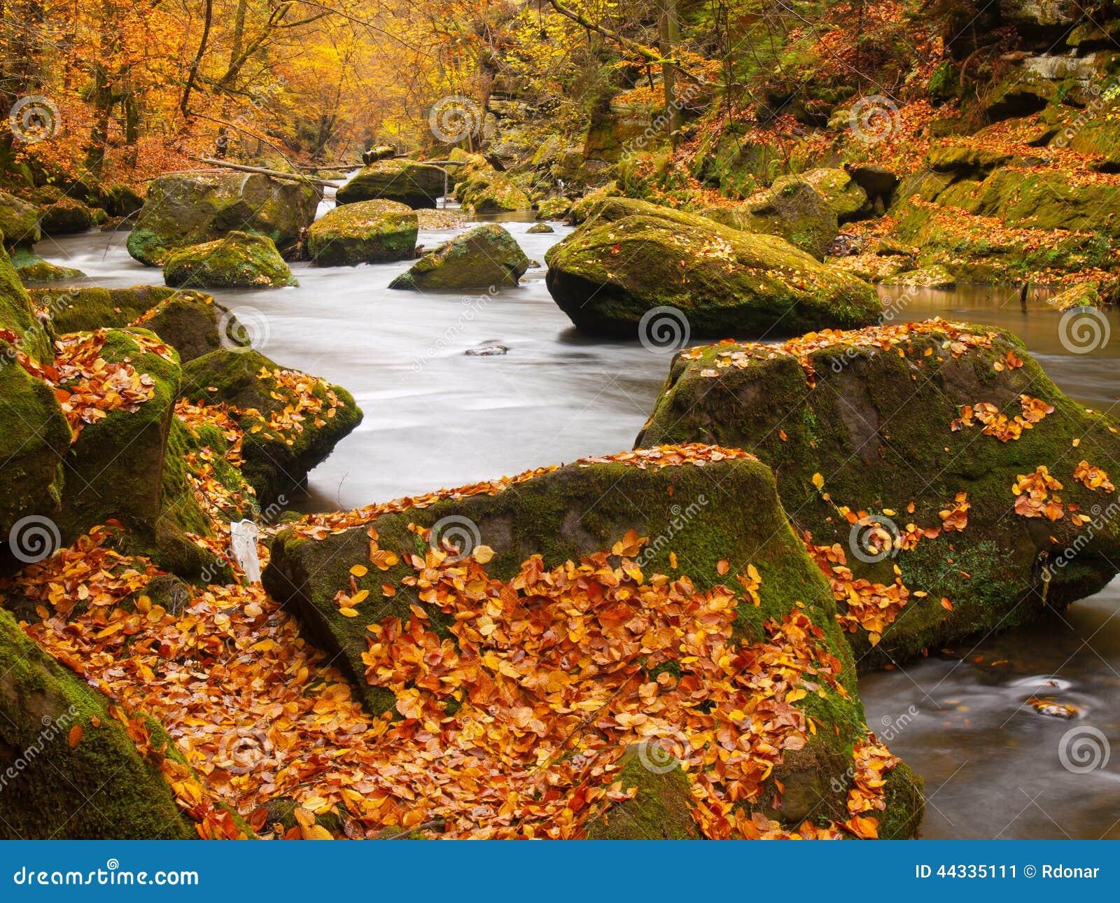 Большие валуны с упаденными листьями Речные берега горы осени Гравий и свежие зеленые мшистые валуны на банках с красочными листь