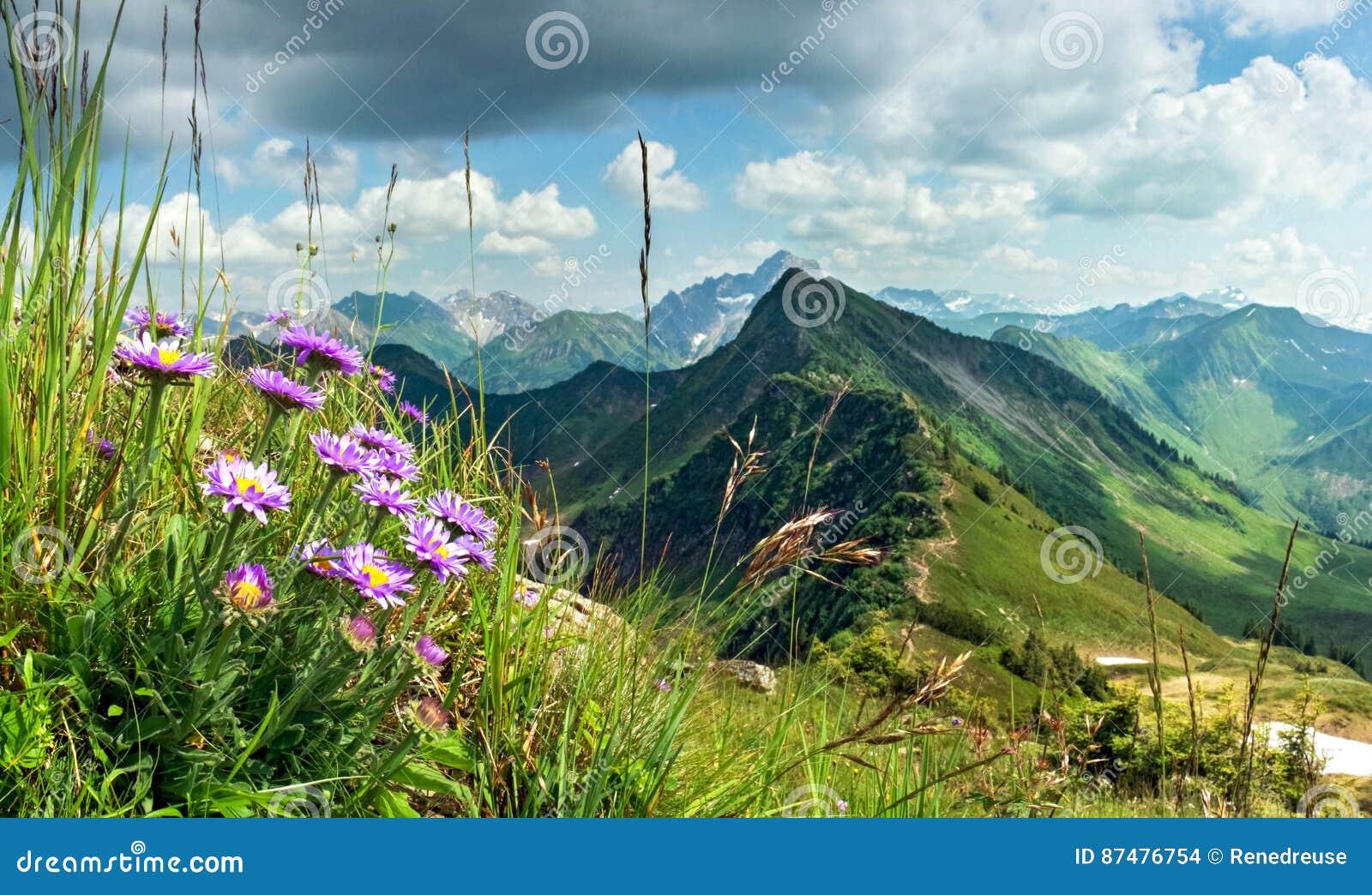 Большое четкое представление от высокой горы с цветками в переднем плане