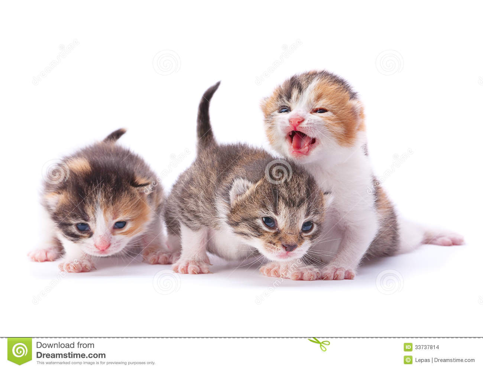 Большой котенок 3