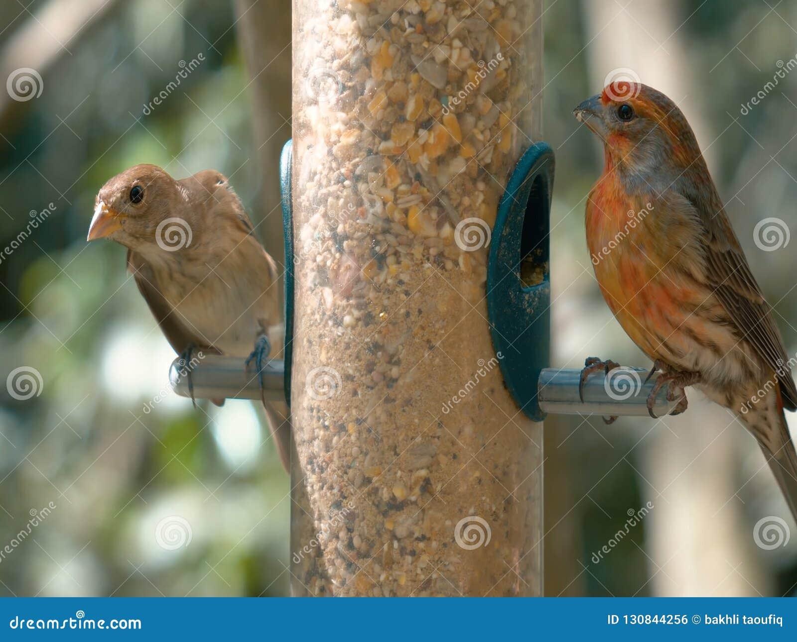 Брайн возглавил попугая сидя на ветви