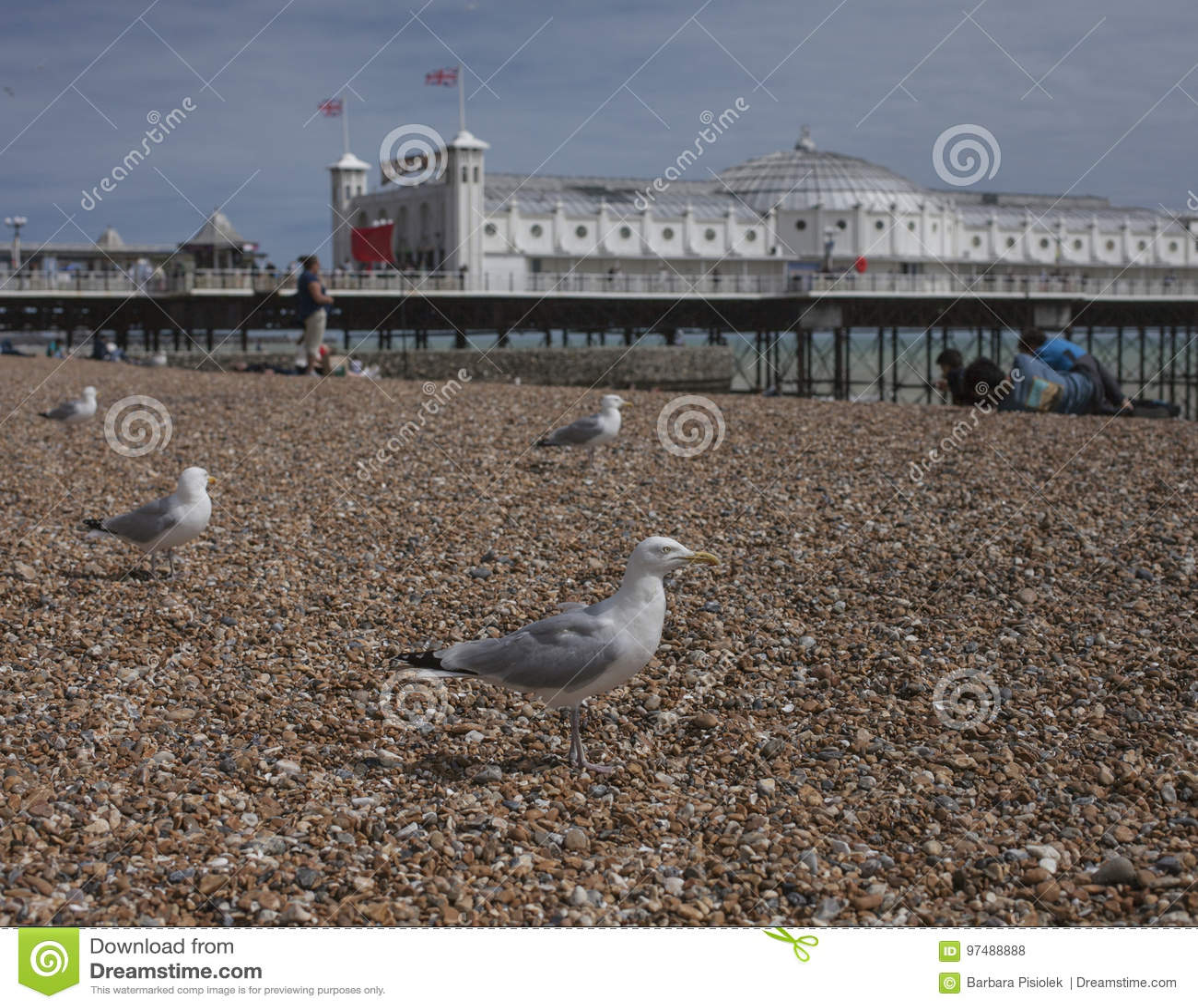 Брайтон, Англия - чайки на камешках