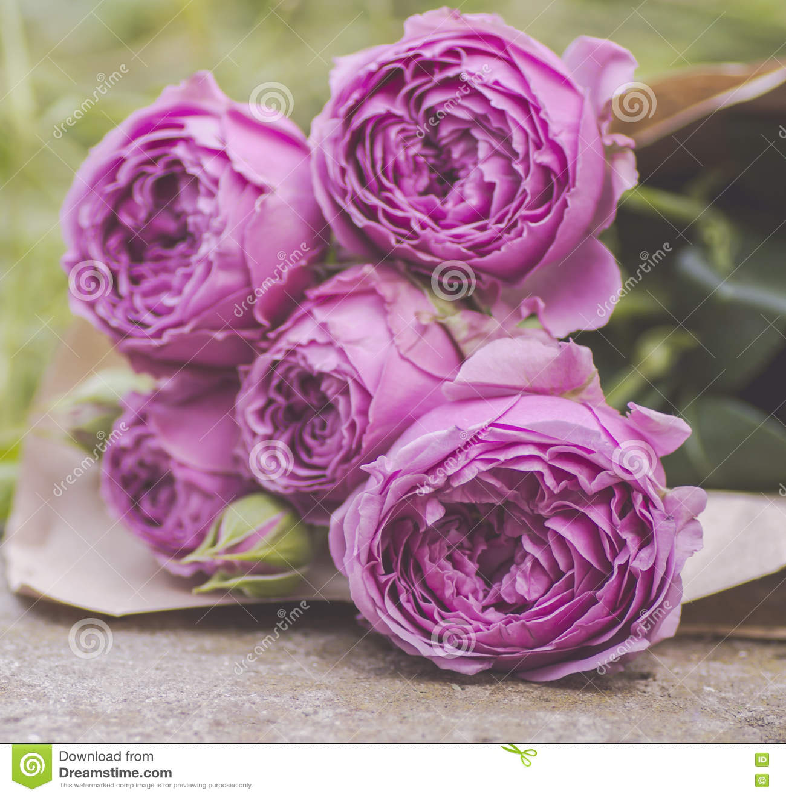 Download Букет бледных фиолетовых роз Стоковое Фото - изображение насчитывающей природа, подарок: 72284886
