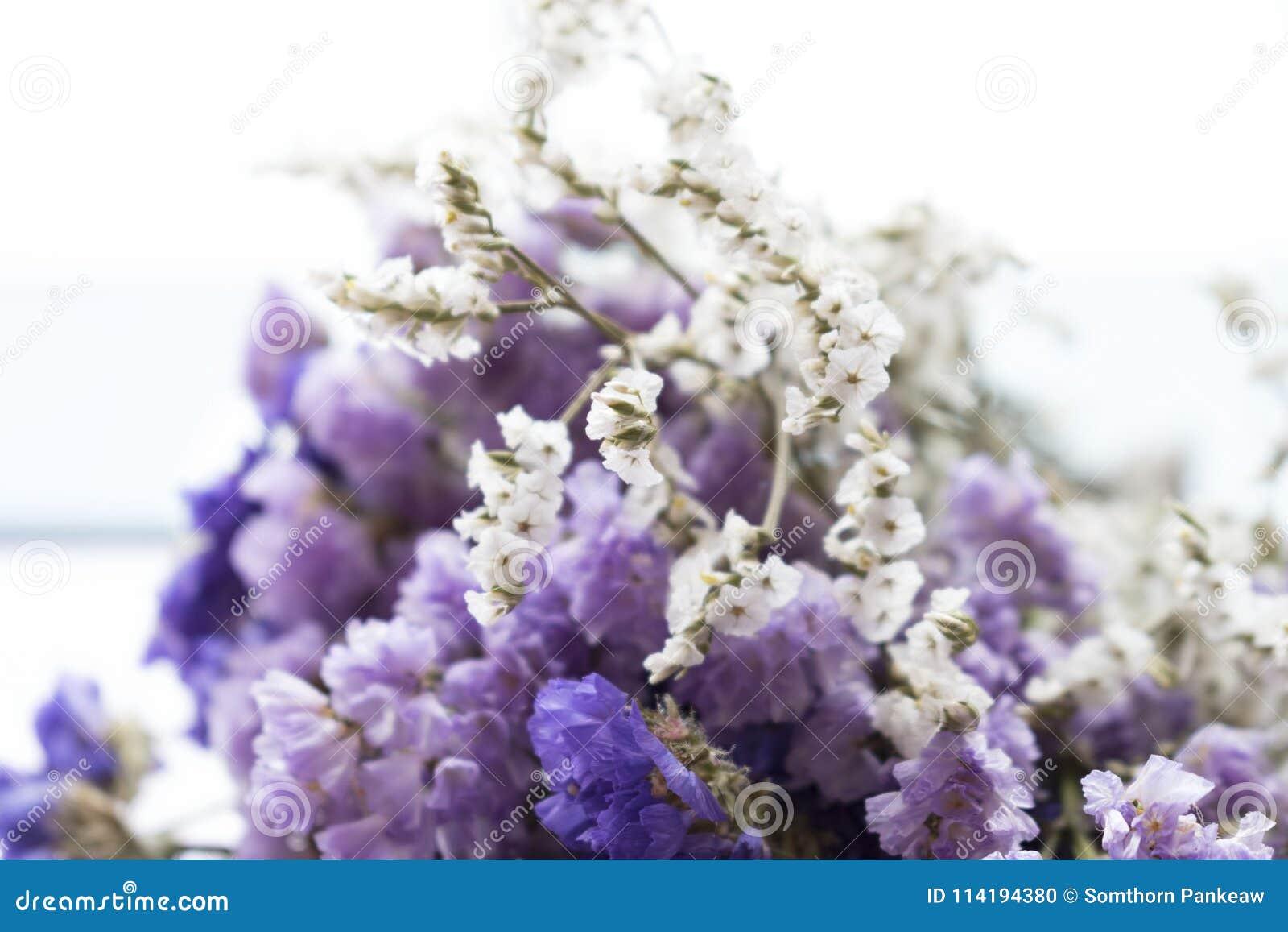 Букет высушенных цветков statice