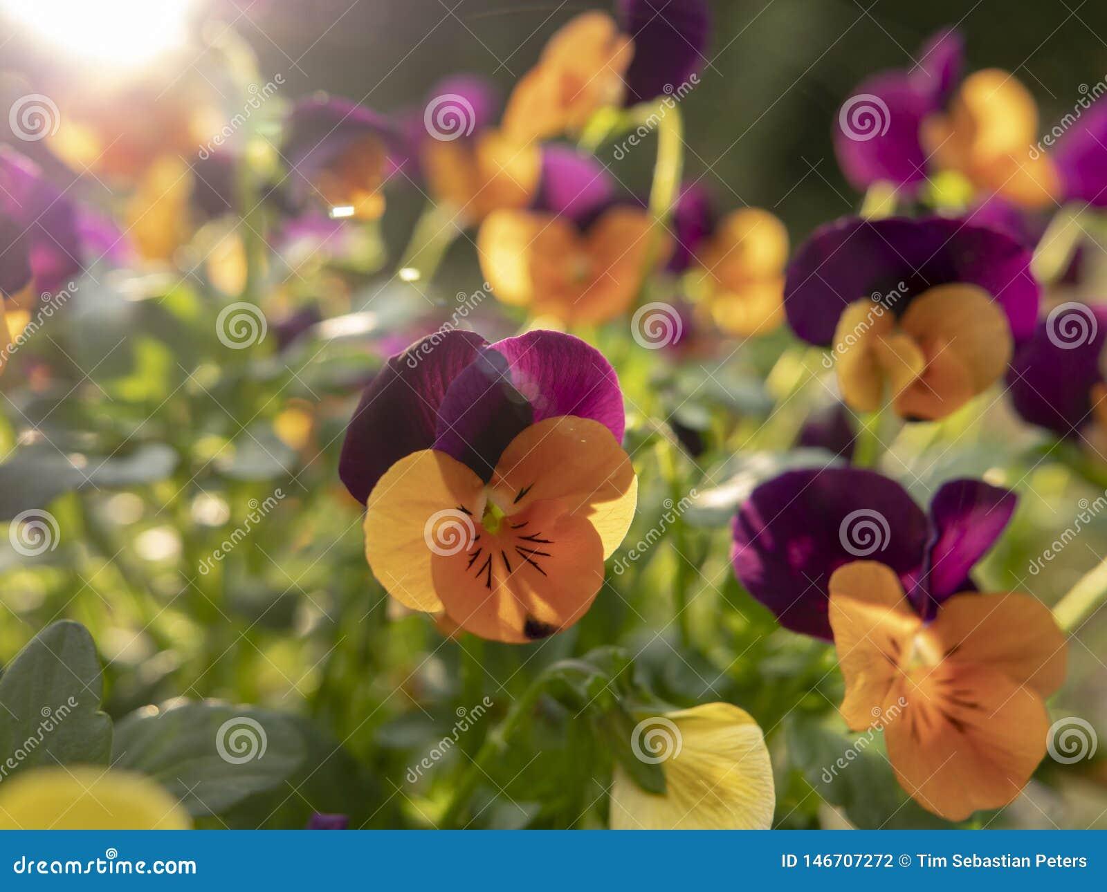 Букет желтых и пурпурных цветков