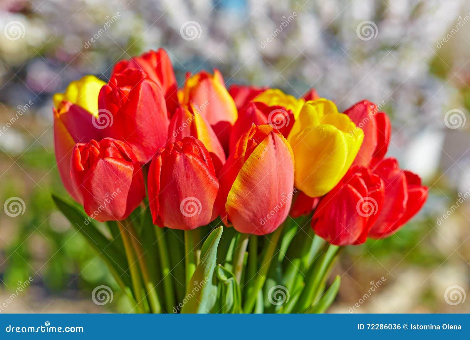Download Букет красных тюльпанов стоковое фото. изображение насчитывающей ботаническую - 72286036